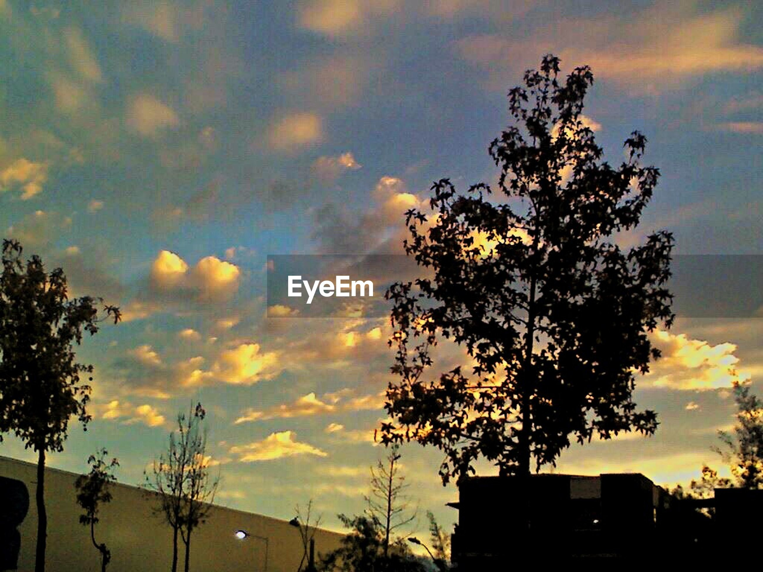 sunset, building exterior, silhouette, sky, built structure, tree, architecture, low angle view, cloud - sky, house, orange color, branch, nature, beauty in nature, growth, residential structure, residential building, cloud, outdoors, building