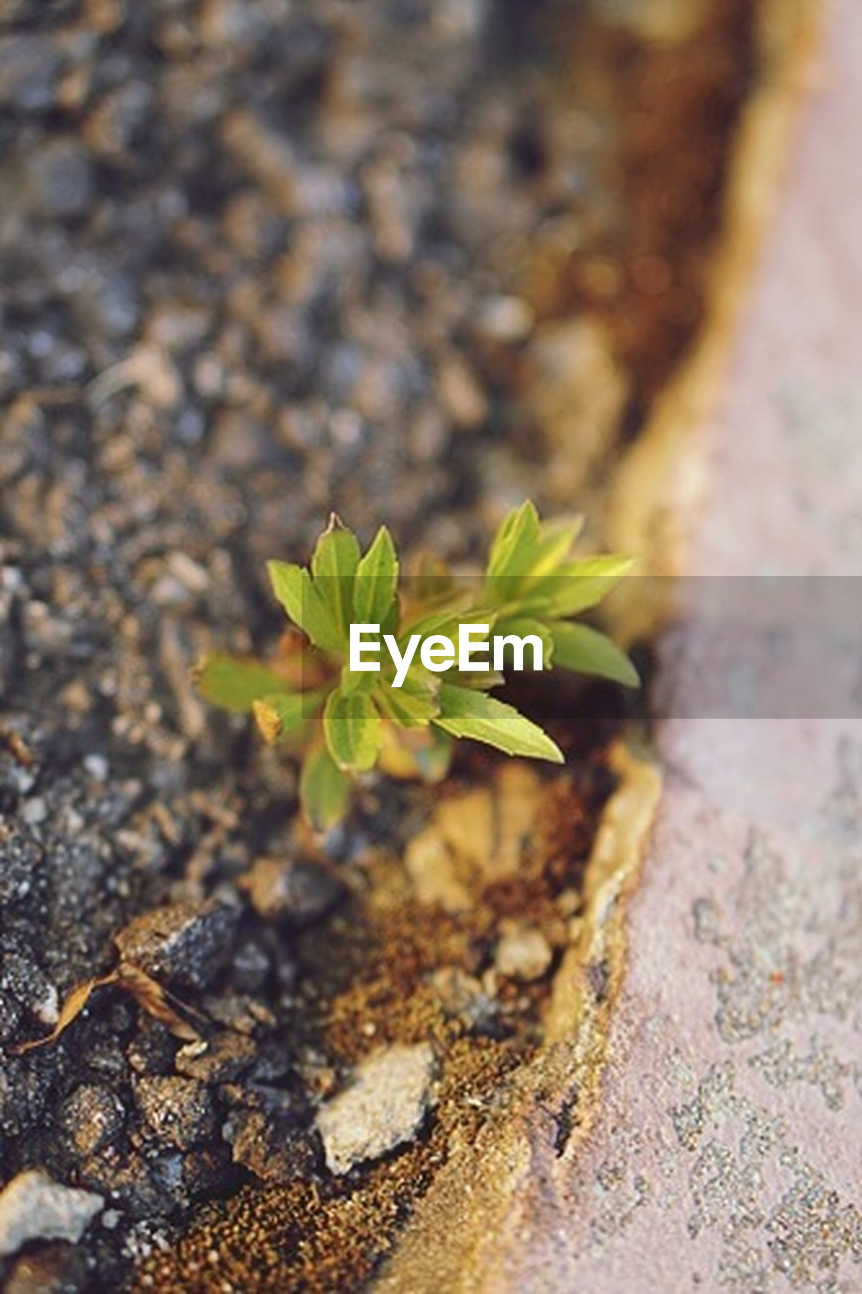 growth, leaf, plant, nature, close-up, green color, selective focus, growing, focus on foreground, outdoors, day, textured, moss, high angle view, no people, rock - object, fragility, beauty in nature, sunlight, rough