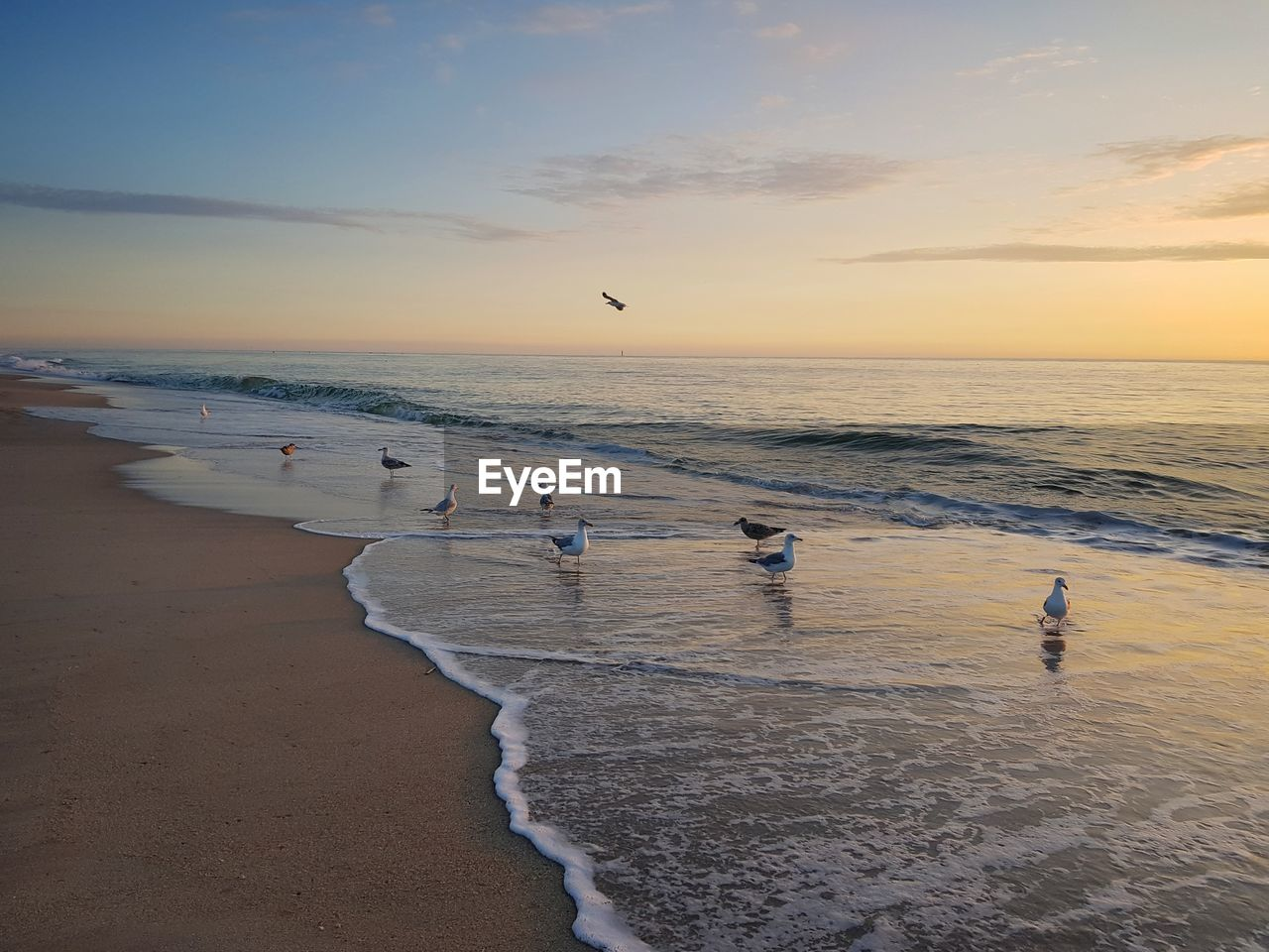 sea, water, beach, sky, sunset, land, horizon, horizon over water, beauty in nature, scenics - nature, sand, group of people, real people, nature, wave, motion, bird, sport, cloud - sky, outdoors