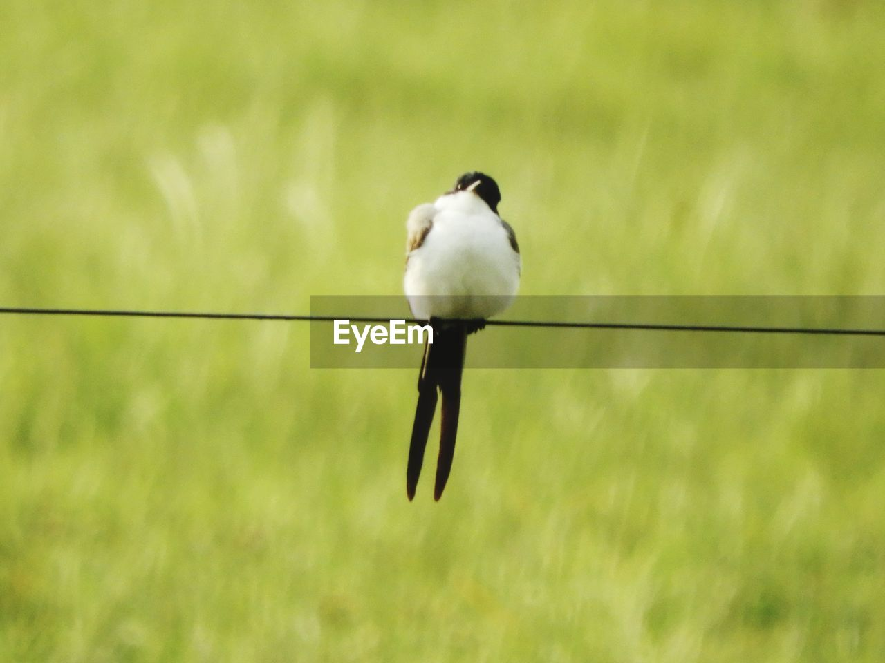 animal themes, one animal, bird, animals in the wild, day, animal wildlife, nature, no people, outdoors, full length, perching, close-up