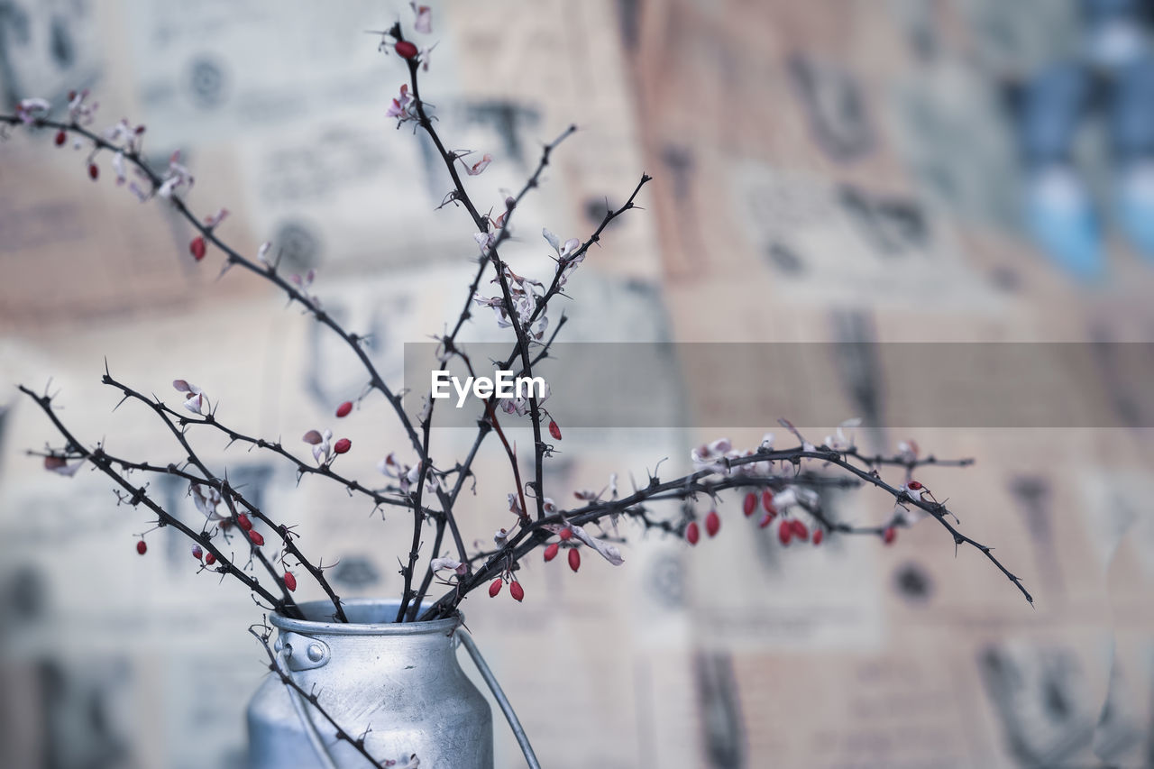 focus on foreground, no people, close-up, plant, branch, day, tree, nature, flowering plant, flower, outdoors, architecture, beauty in nature, freshness, building exterior, growth, vase, built structure, decoration, bare tree