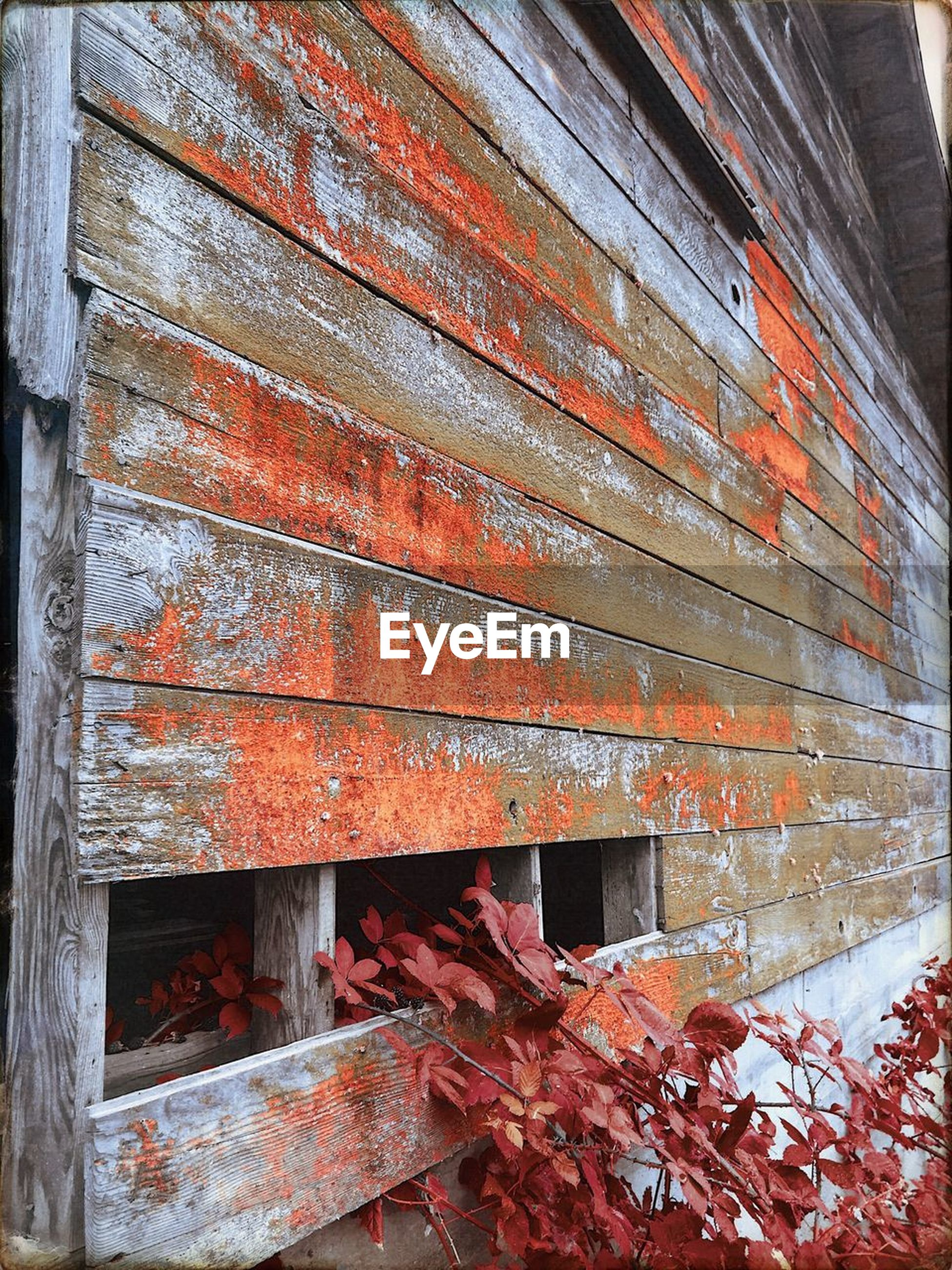 built structure, architecture, wood - material, leaf, building exterior, no people, red, weathered, outdoors, autumn, day, change, backgrounds, full frame, close-up, nature