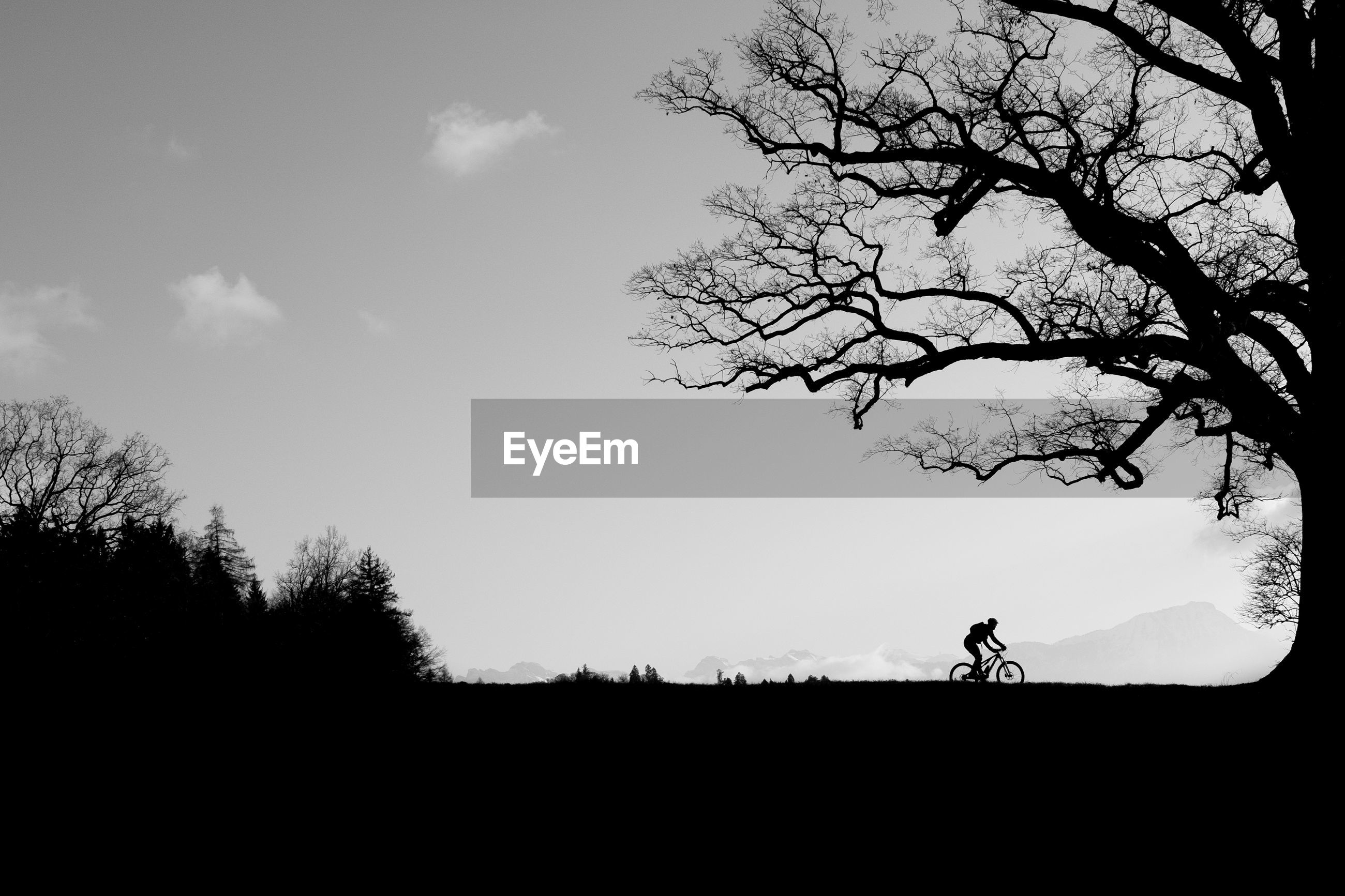 SILHOUETTE OF PERSON RIDING BICYCLE ON FIELD