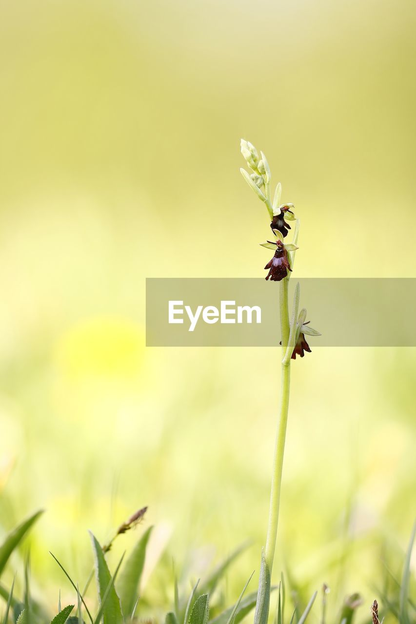 plant, growth, beauty in nature, flower, fragility, flowering plant, vulnerability, close-up, freshness, green color, nature, selective focus, day, invertebrate, petal, no people, insect, field, land, focus on foreground, flower head, outdoors, pollination