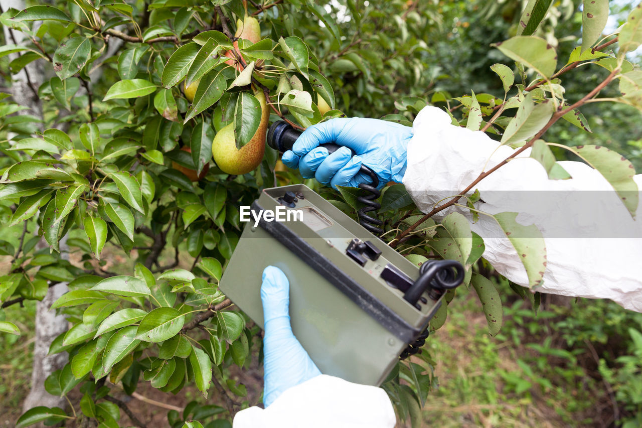 Cropped hand examining fruits in plant