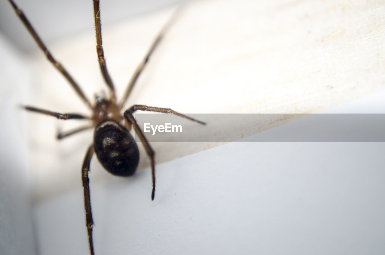 High angle view of spider