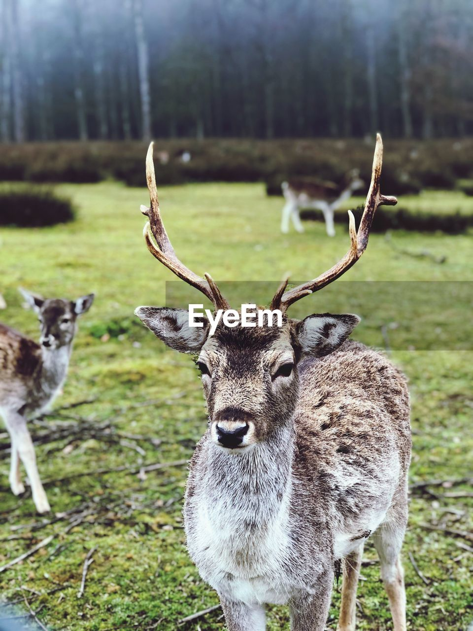 animal, animal themes, mammal, land, field, animal wildlife, plant, group of animals, vertebrate, animals in the wild, grass, deer, day, focus on foreground, no people, tree, nature, portrait, looking at camera, herbivorous, outdoors, herd
