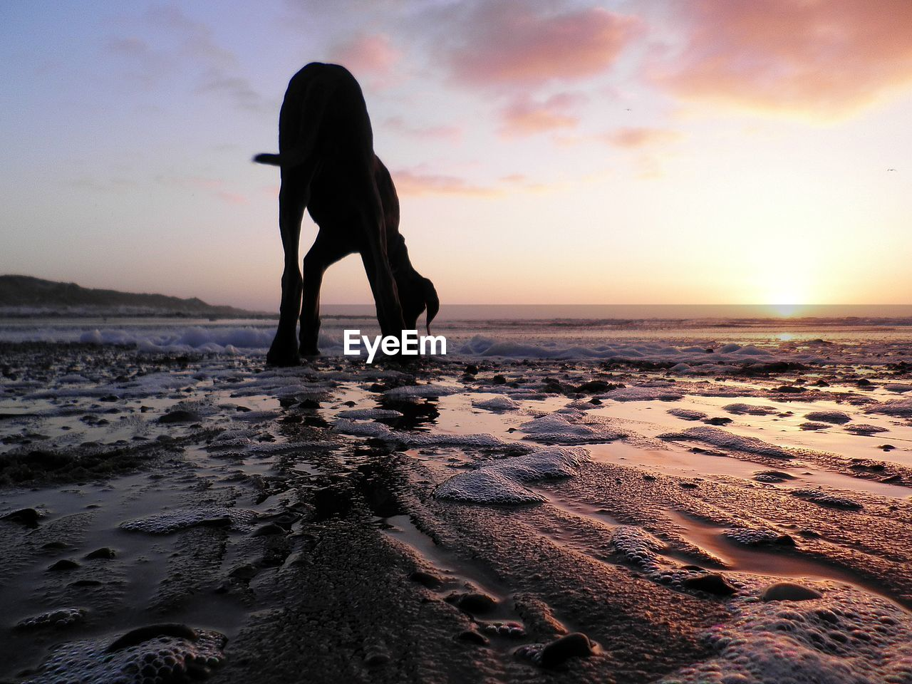 Dog Standing At Beach Against Sky During Sunset