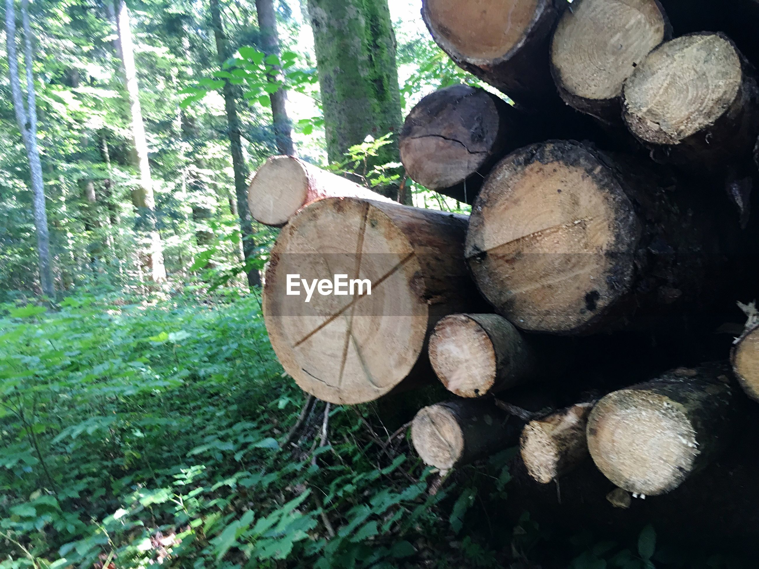 Logs by plants against trees in forest
