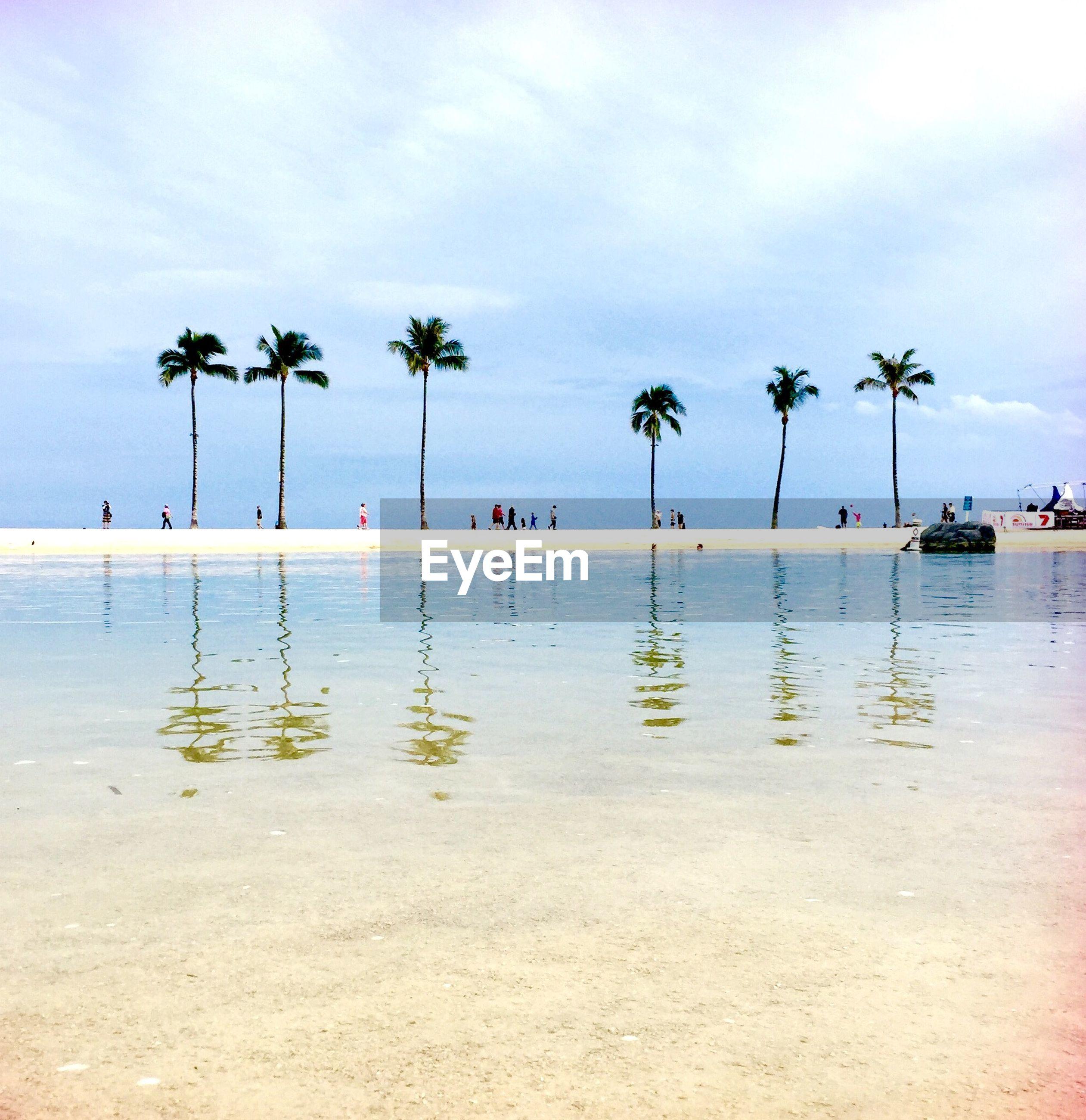 Palm trees on beach against cloudy sky