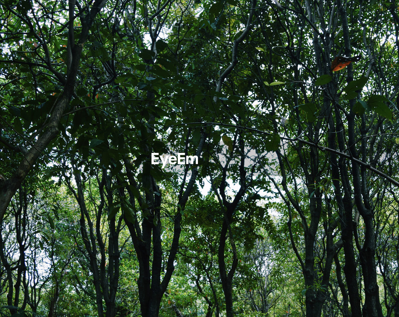 tree, plant, growth, forest, low angle view, green color, tranquility, beauty in nature, land, day, tree trunk, no people, nature, trunk, outdoors, branch, tranquil scene, scenics - nature, lush foliage, full frame, tree canopy, bamboo - plant, rainforest