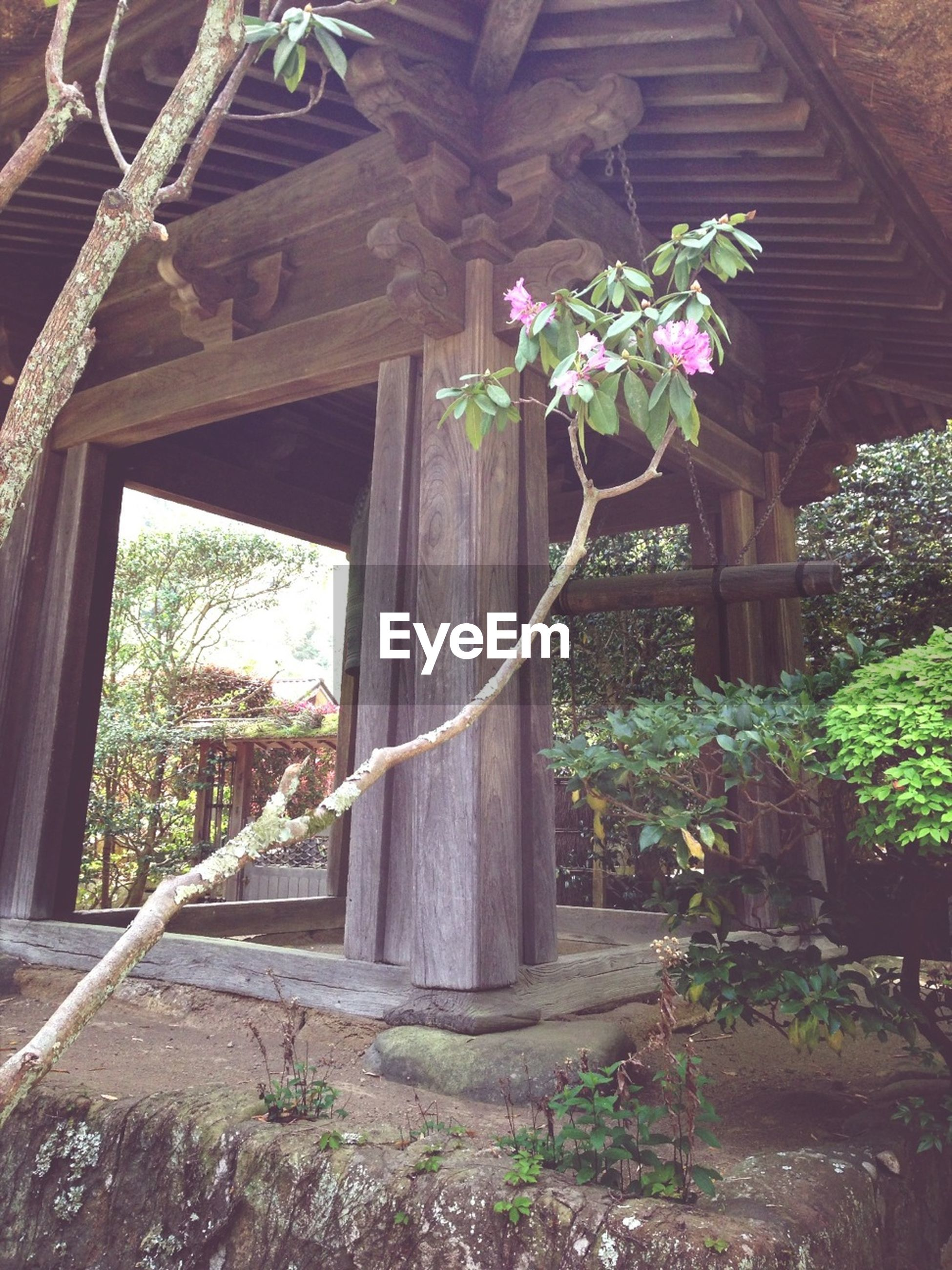 built structure, flower, architecture, plant, growth, house, building exterior, tree, window, wood - material, low angle view, potted plant, sunlight, indoors, day, nature, front or back yard, freshness, no people, fragility