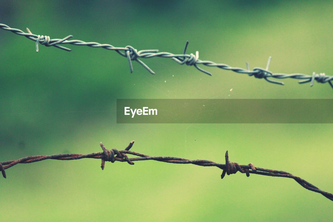 safety, security, protection, fence, barbed wire, wire, barrier, metal, boundary, sharp, focus on foreground, no people, day, close-up, nature, warning sign, spiked, outdoors, forbidden, twisted