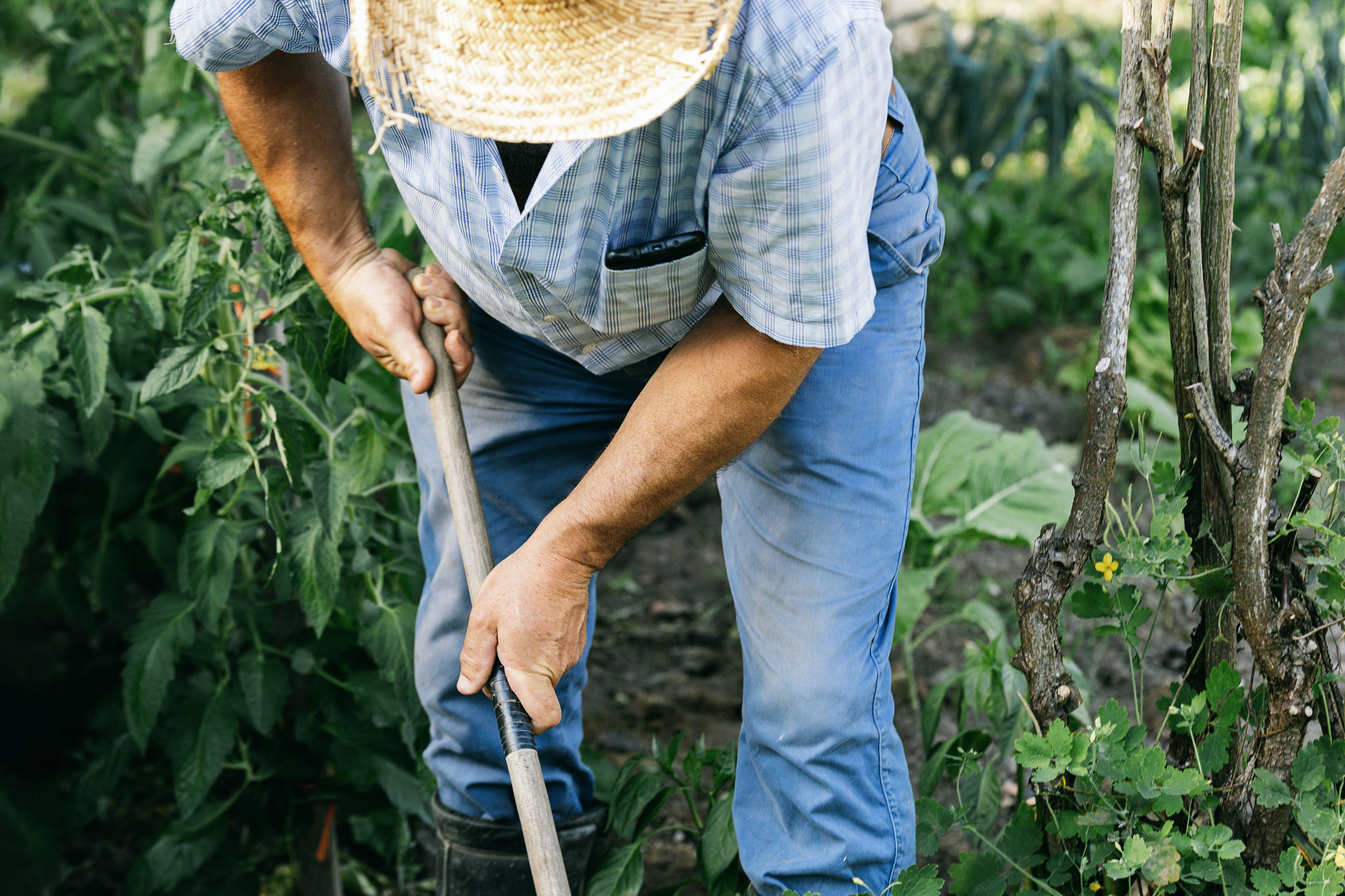 REAR VIEW OF MAN WORKING IN FIELD
