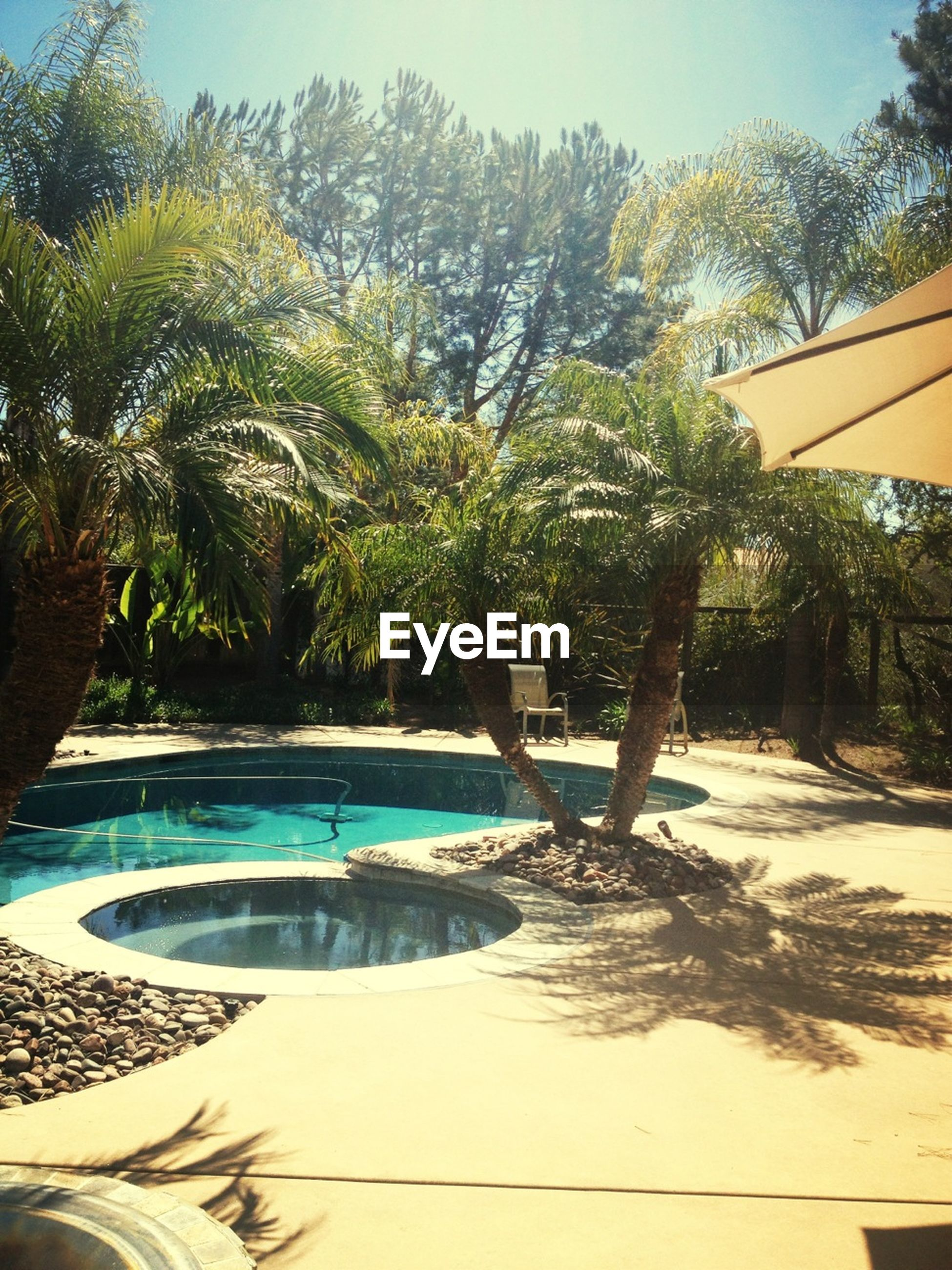 tree, palm tree, water, sunlight, growth, beach, tranquility, swimming pool, tranquil scene, nature, sea, sky, clear sky, scenics, shadow, beauty in nature, built structure, day, sand, tree trunk