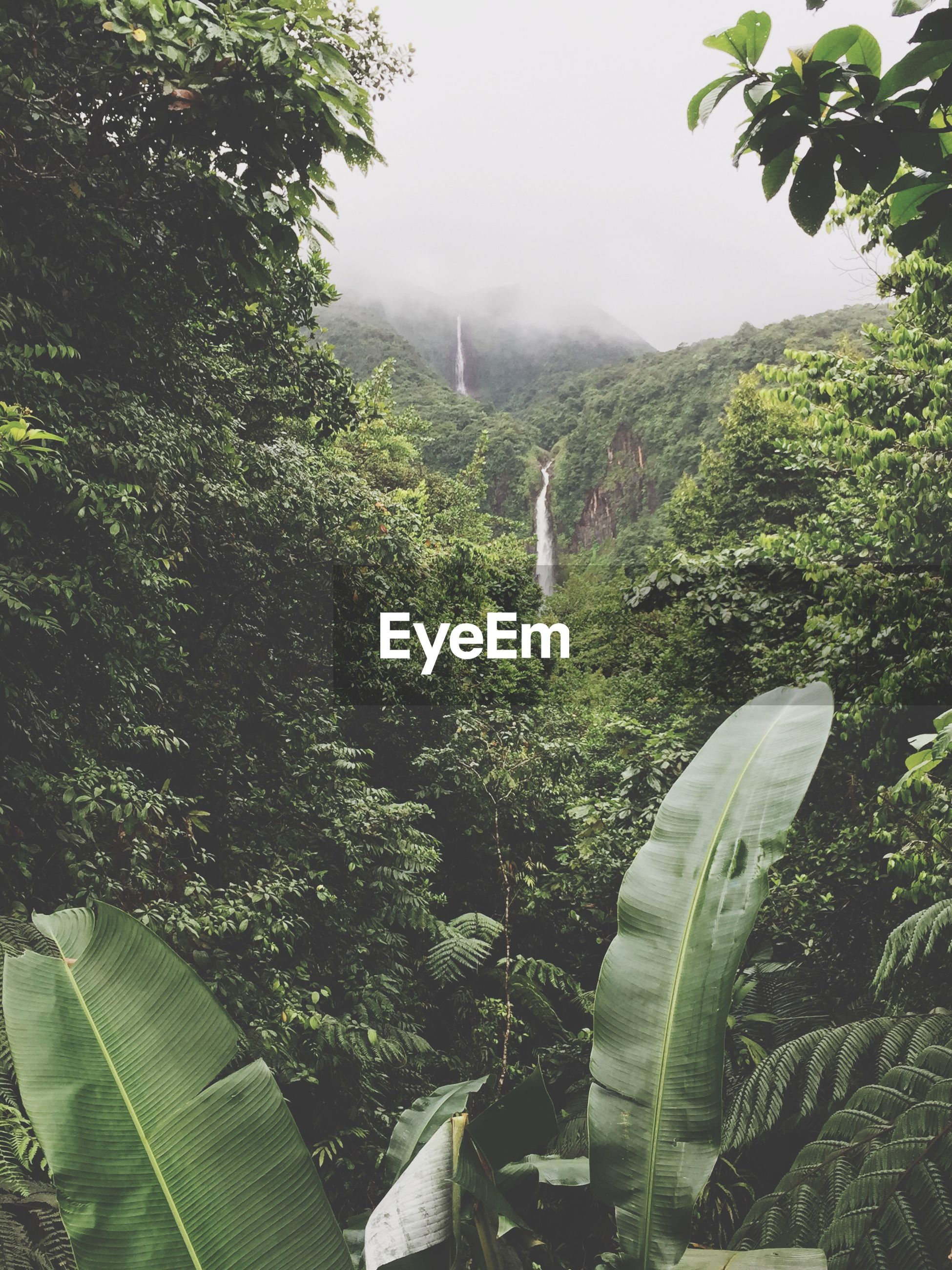 Trees on mountains