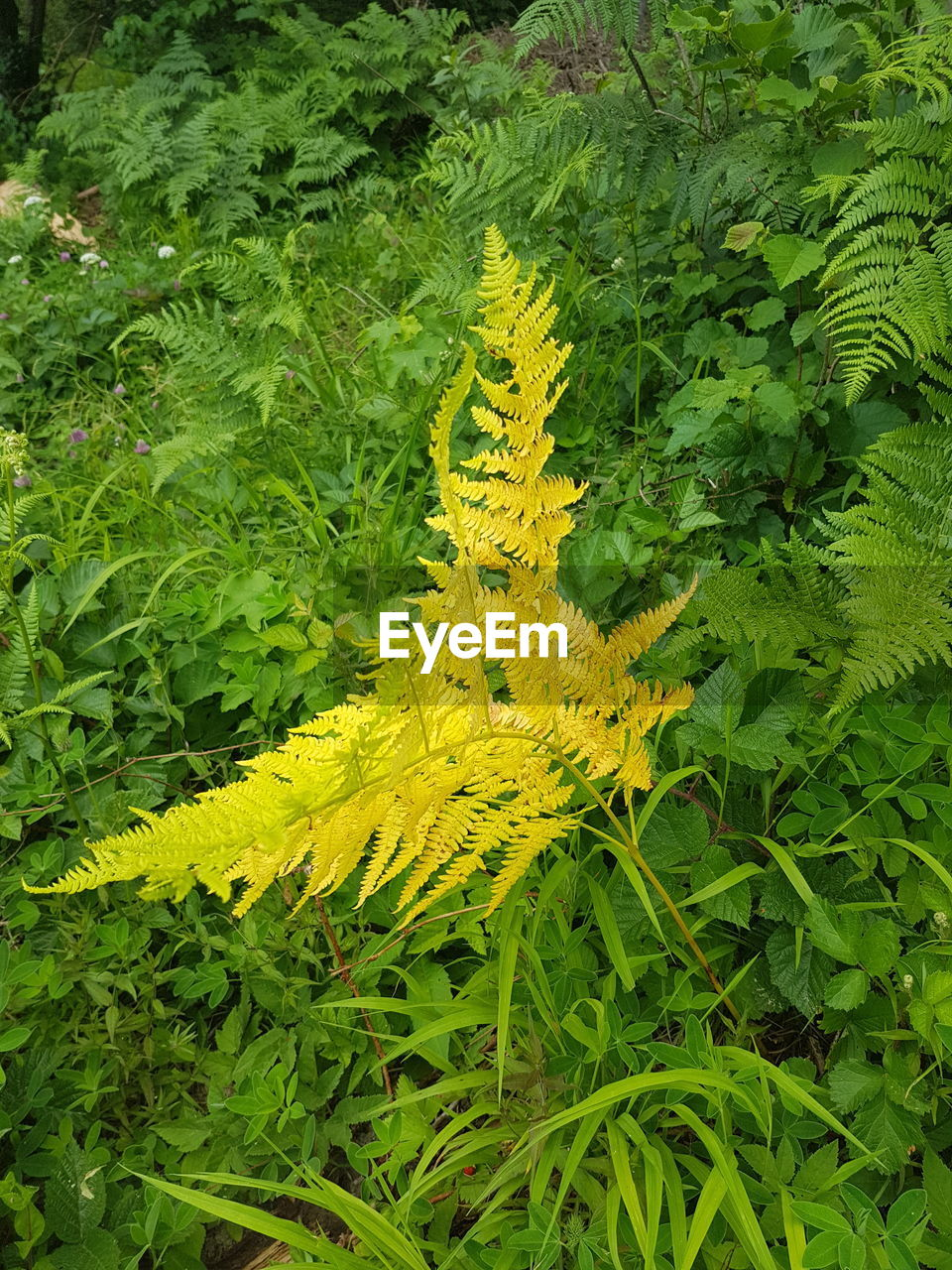 green color, plant, growth, leaf, plant part, nature, yellow, beauty in nature, no people, high angle view, close-up, day, fern, freshness, flower, outdoors, flowering plant, natural pattern, land, animals in the wild