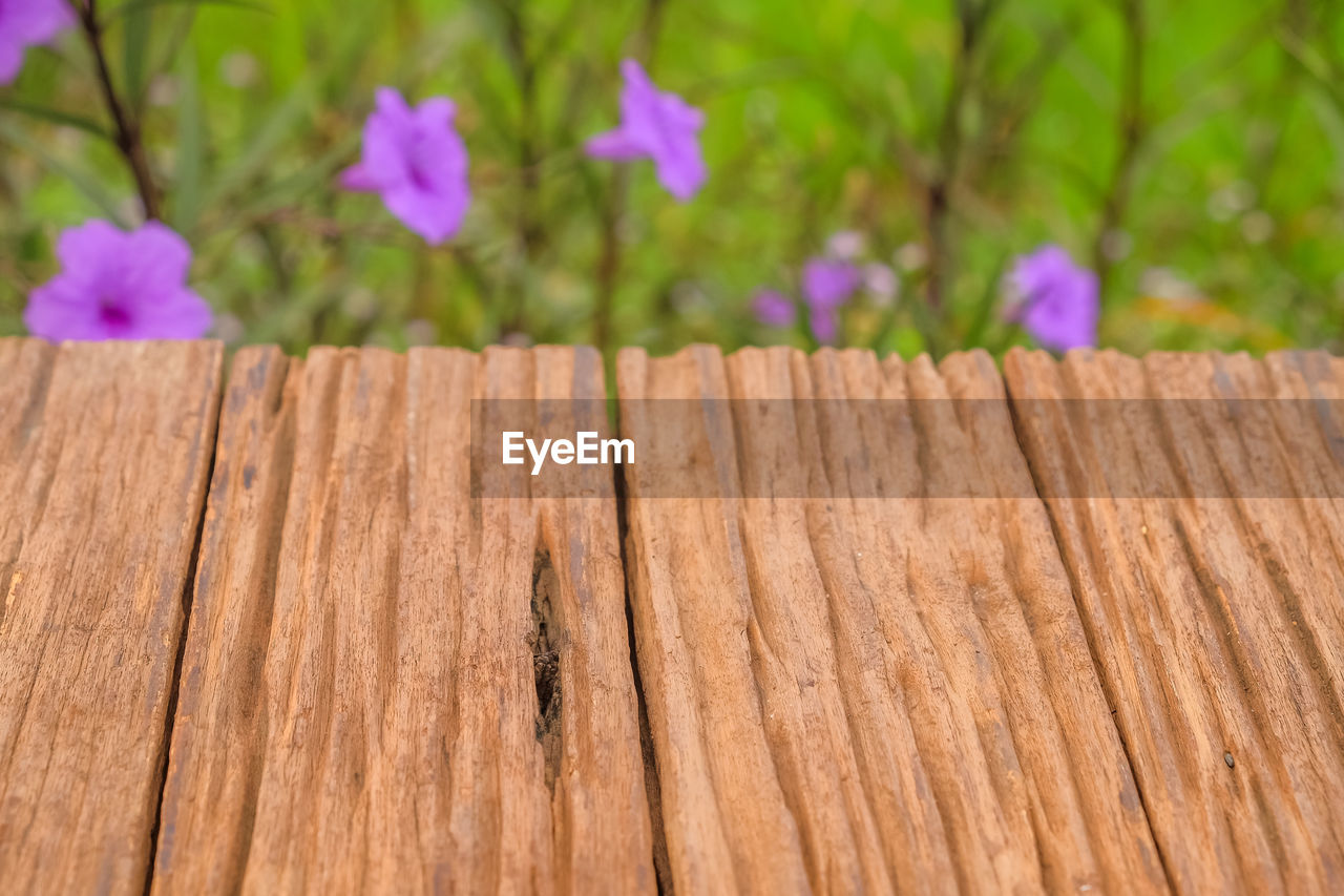 wood - material, plant, flower, flowering plant, close-up, nature, wood, growth, selective focus, outdoors, textured, no people, day, plank, vulnerability, beauty in nature, tree, fragility, brown, freshness, wood grain