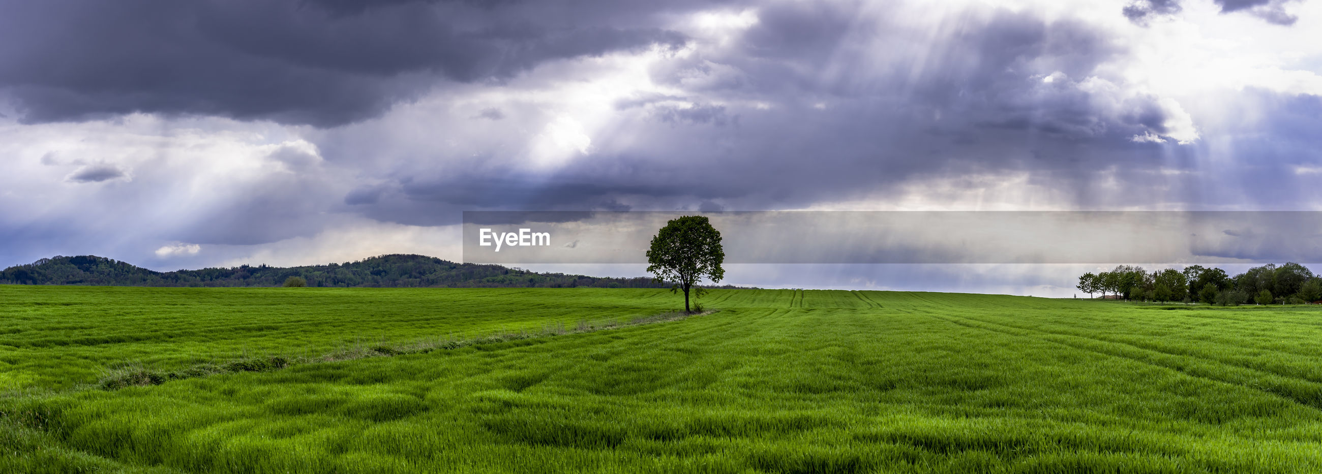 Panoramic shot of trees on land against sky