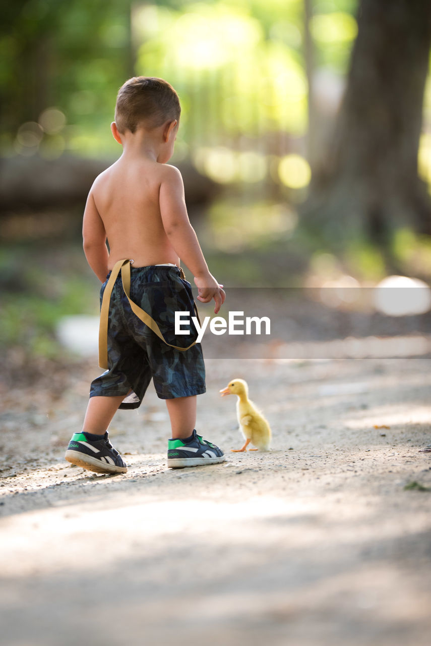 Rear View Full Length Of Shirtless Boy Standing By Duckling On Road
