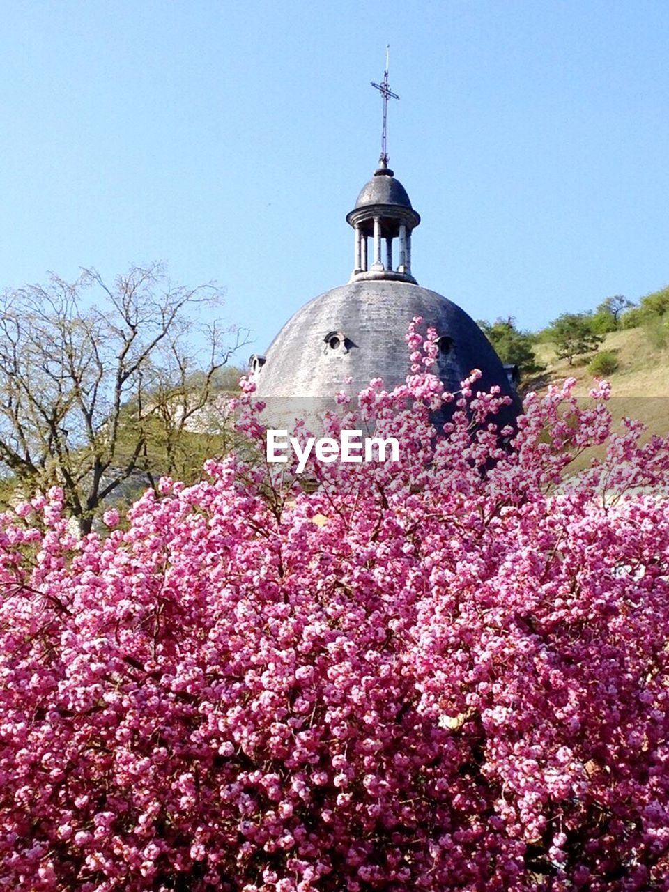 sky, plant, flower, flowering plant, nature, tree, low angle view, clear sky, growth, day, pink color, built structure, freshness, architecture, building exterior, fragility, place of worship, beauty in nature, religion, belief, springtime, no people, outdoors, cherry blossom, spire