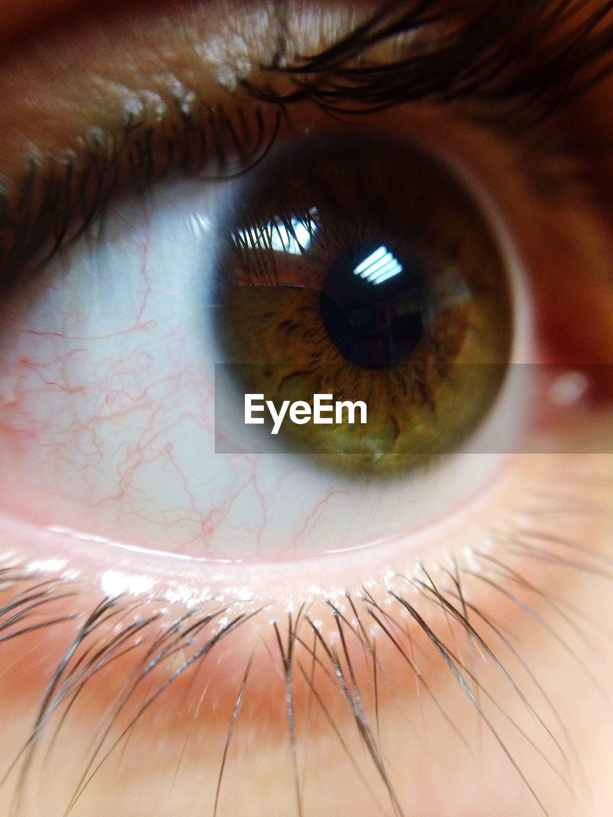 human eye, eyelash, eyesight, close-up, indoors, sensory perception, extreme close-up, full frame, part of, iris - eye, eyeball, human skin, backgrounds, vision, looking at camera, detail, extreme close up
