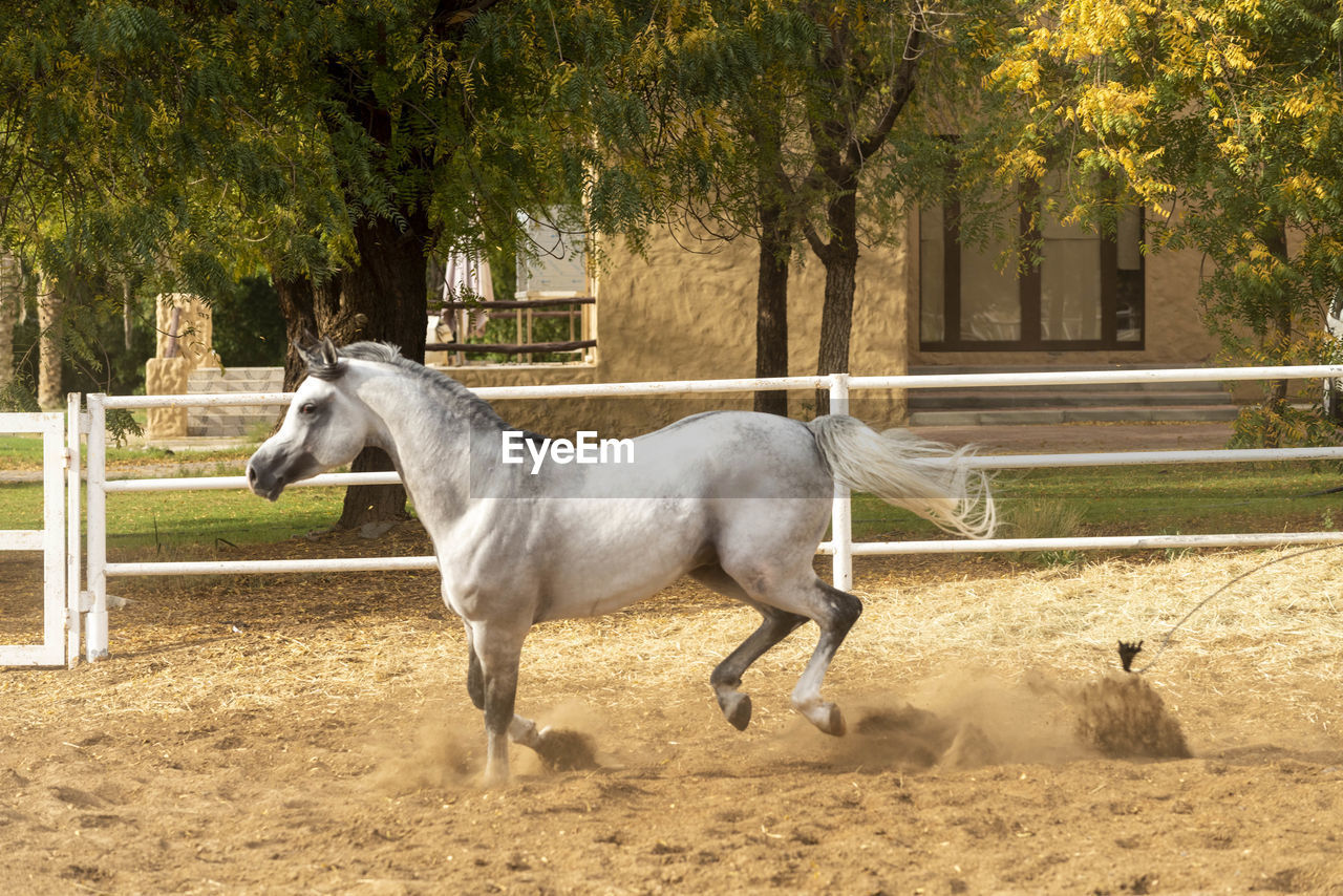 SIDE VIEW OF A HORSE IN RANCH