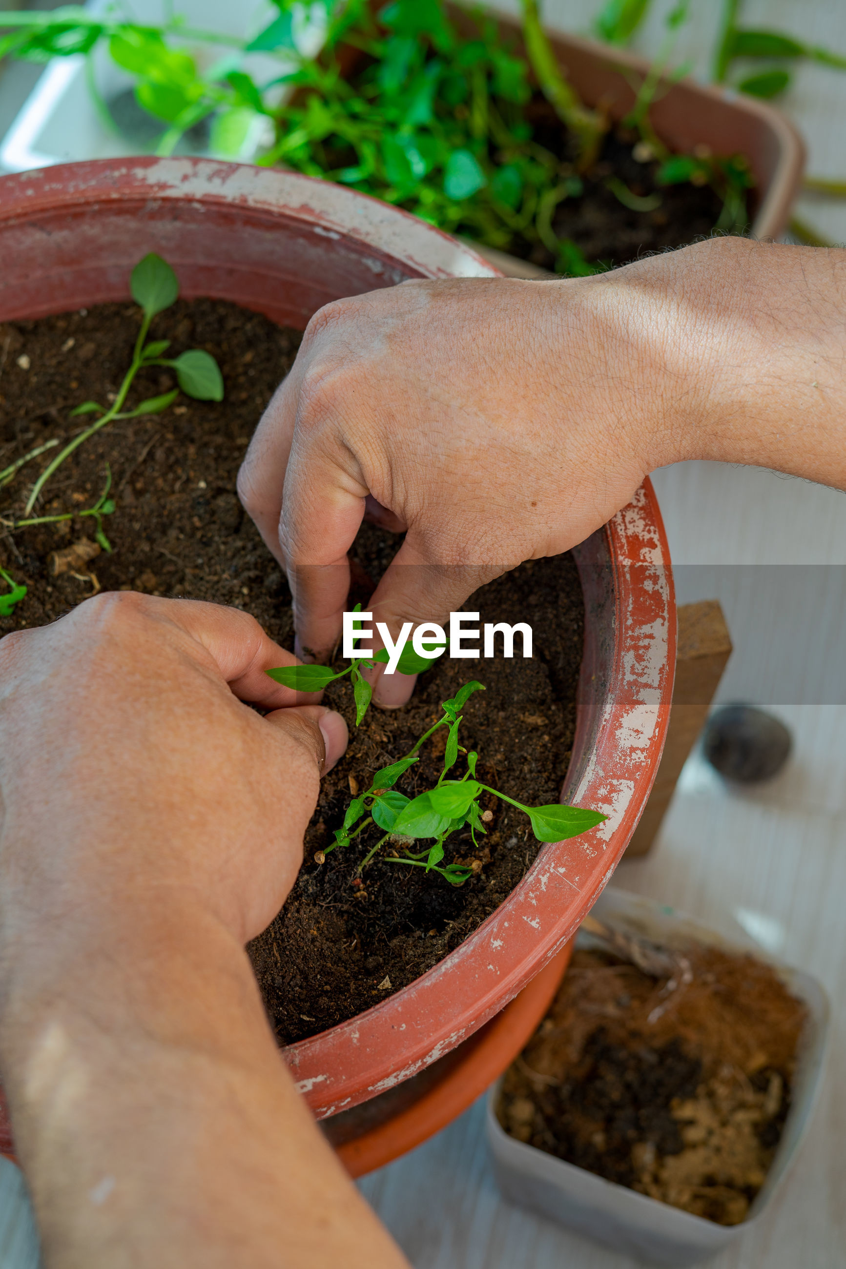 HIGH ANGLE VIEW OF PERSON HOLDING POTTED PLANT