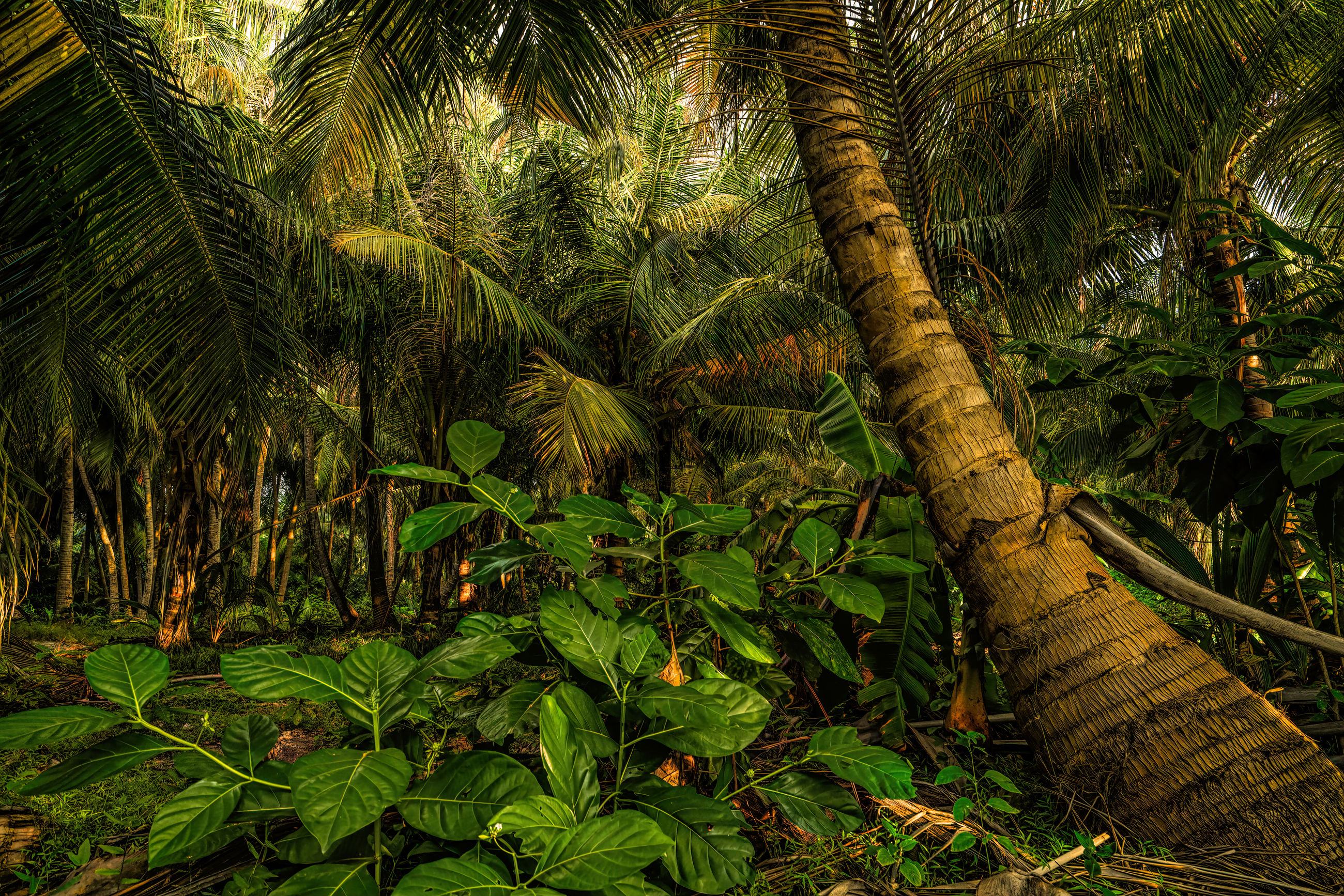 View of palm trees in forest