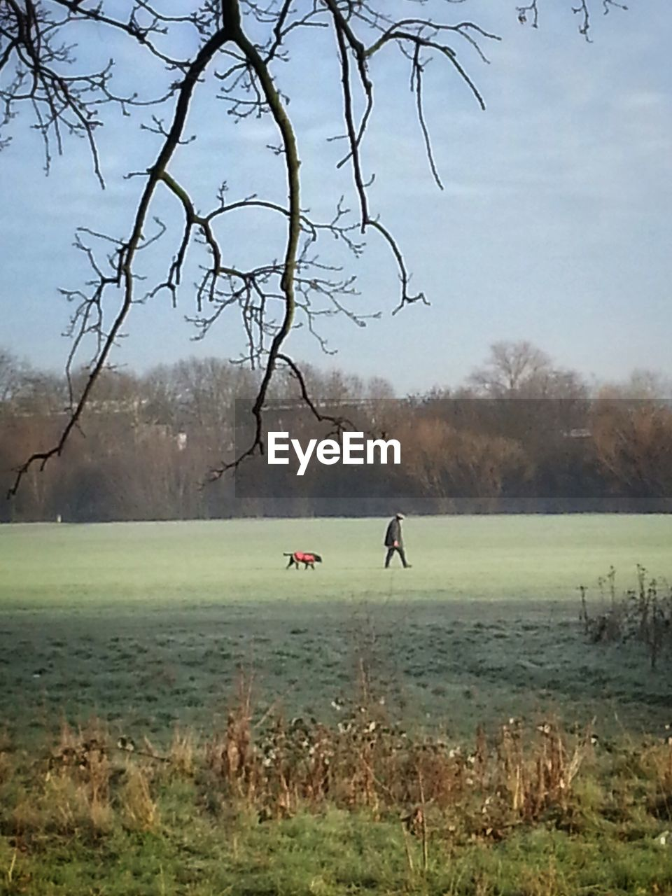 tree, nature, bare tree, grass, field, real people, day, leisure activity, outdoors, landscape, tranquility, beauty in nature, fog, scenics, growth, lifestyles, sky, men, branch, water, sport, flying, golf course, golf, one person, people