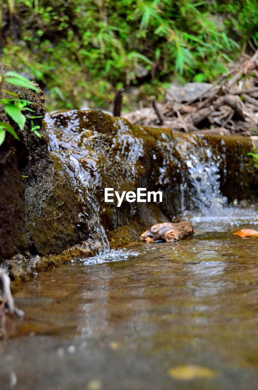 water, animal, one animal, animal themes, waterfront, animal wildlife, nature, animals in the wild, rock, day, rock - object, vertebrate, swimming, motion, selective focus, lake, solid, no people, outdoors, stream - flowing water, animal head, flowing water