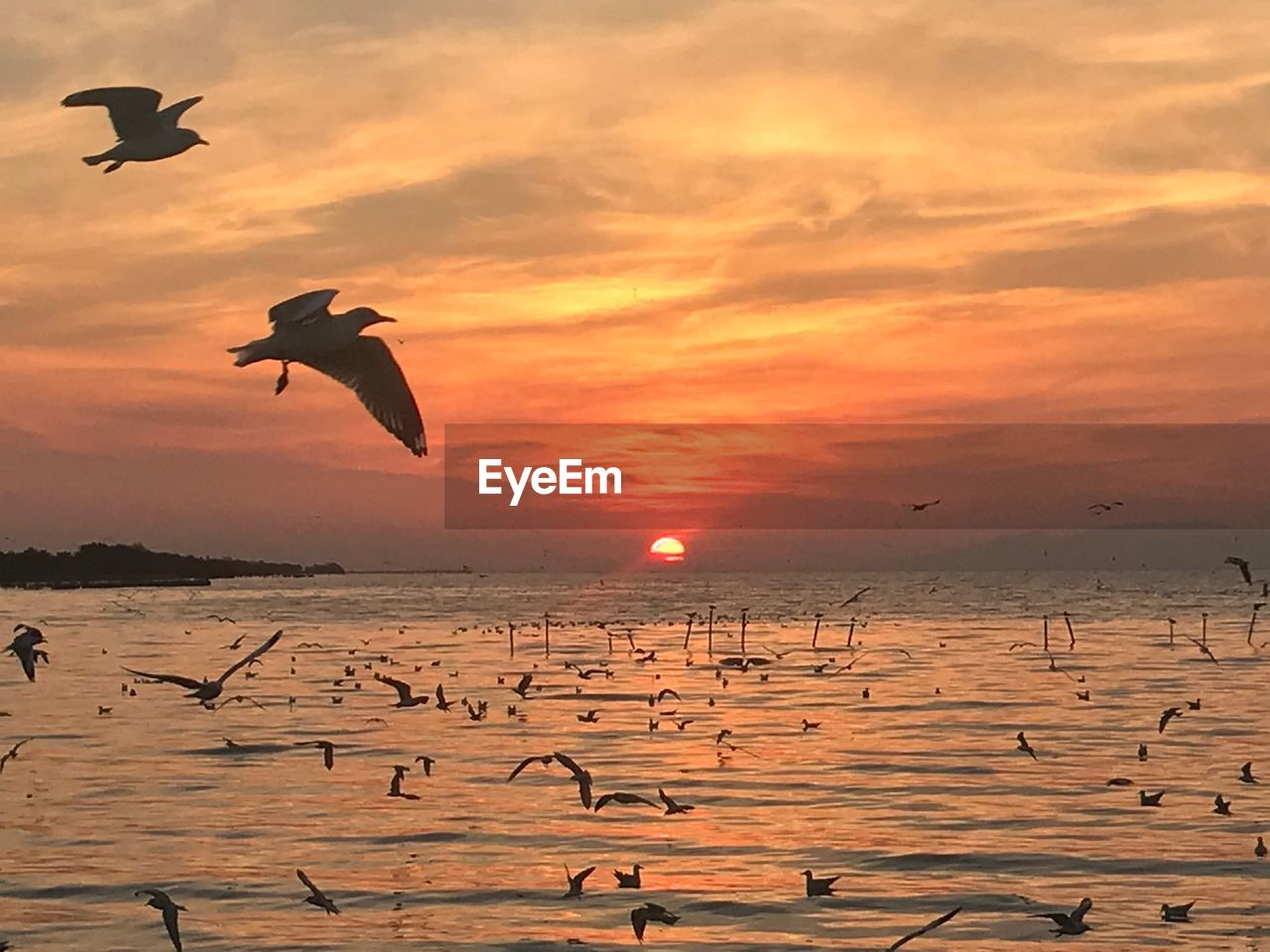 sunset, sea, nature, beauty in nature, water, orange color, sky, scenics, flying, outdoors, bird, sun, silhouette, mid-air, beach, no people, tranquility, horizon over water, animal themes, animals in the wild, large group of animals, spread wings, day