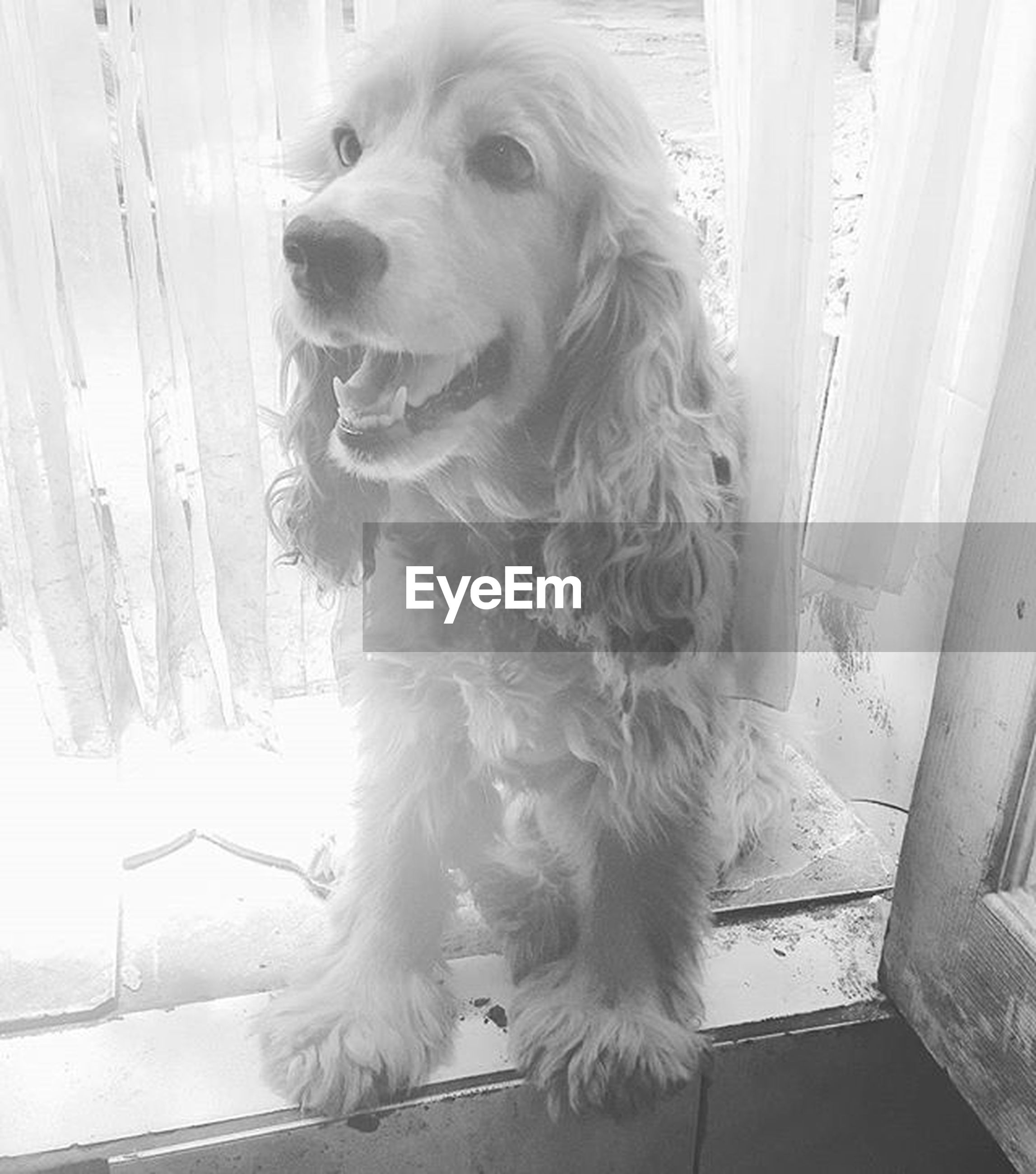pets, domestic animals, dog, one animal, mammal, animal themes, indoors, animal hair, sitting, home interior, looking away, full length, pampered pets, relaxation, cute, loyalty, window, day, sunlight, portrait
