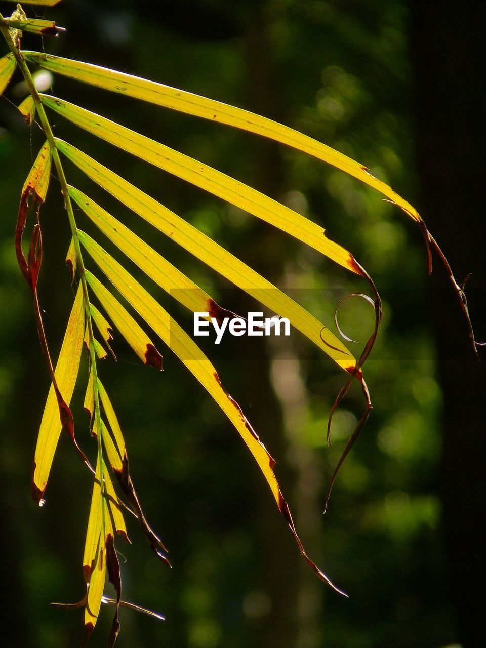 focus on foreground, plant, growth, beauty in nature, close-up, nature, no people, plant part, leaf, day, outdoors, green color, fragility, vulnerability, sunlight, selective focus, tree, freshness, water, blade of grass