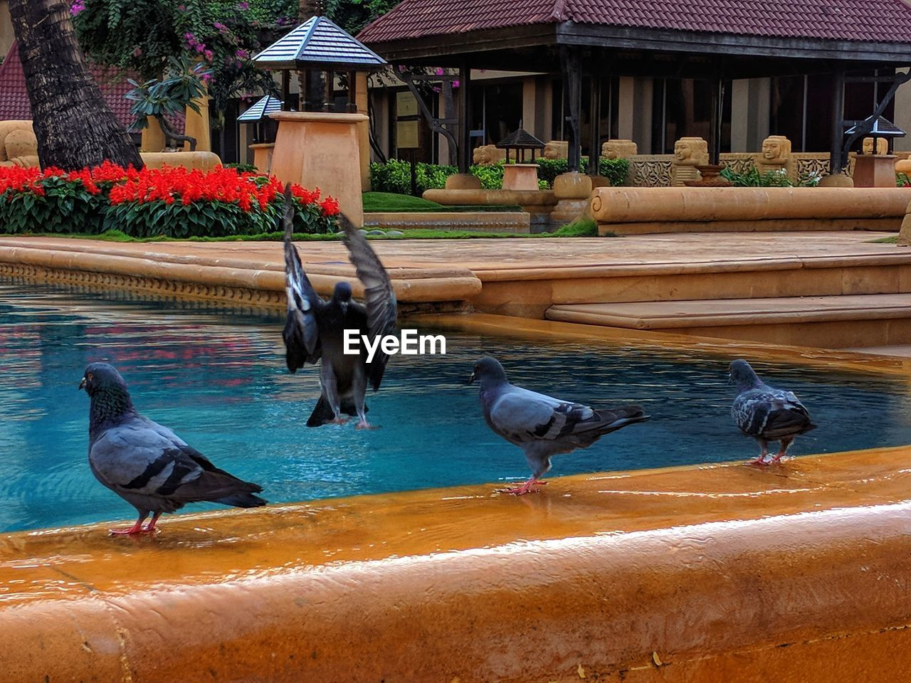 animal themes, bird, animals in the wild, animal wildlife, outdoors, water, nature, no people, day, architecture