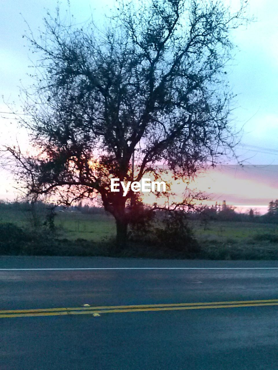 tree, road, no people, sky, outdoors, nature, day, beauty in nature, bare tree, scenics