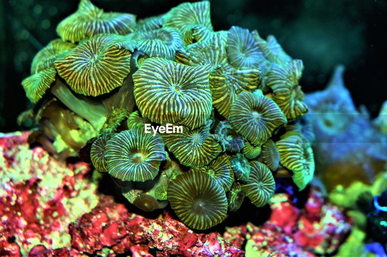 animals in the wild, animal wildlife, sea life, sea, underwater, coral, water, undersea, animal themes, marine, animal, invertebrate, close-up, beauty in nature, no people, nature, natural pattern, reef, group of animals, outdoors, ecosystem