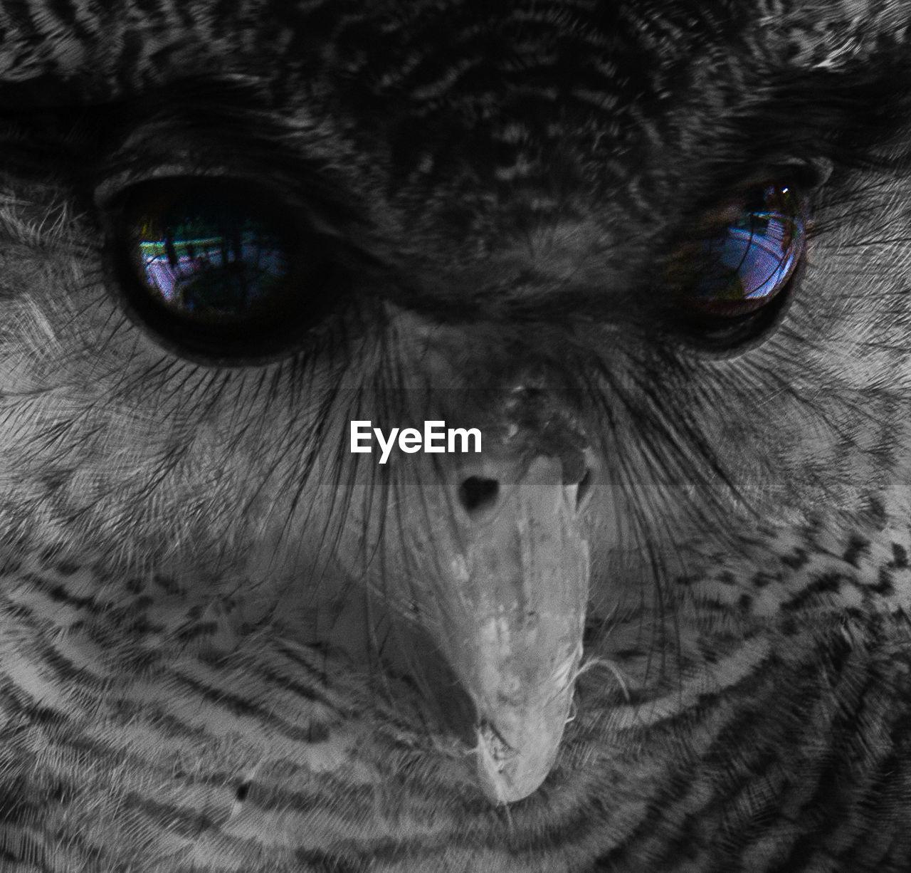 Extreme close-up portrait of owl