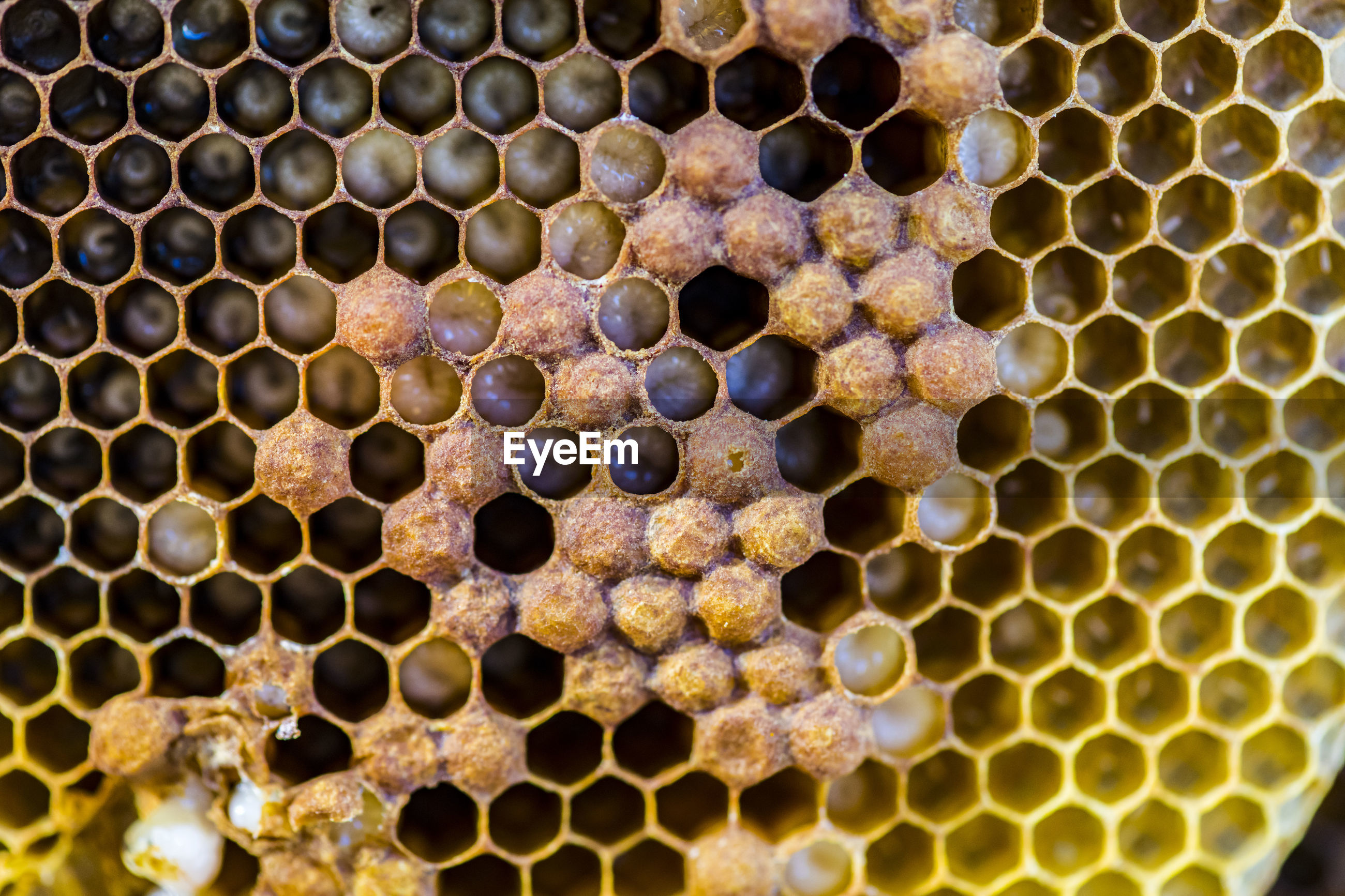 Full frame shot of bees and honeycomb