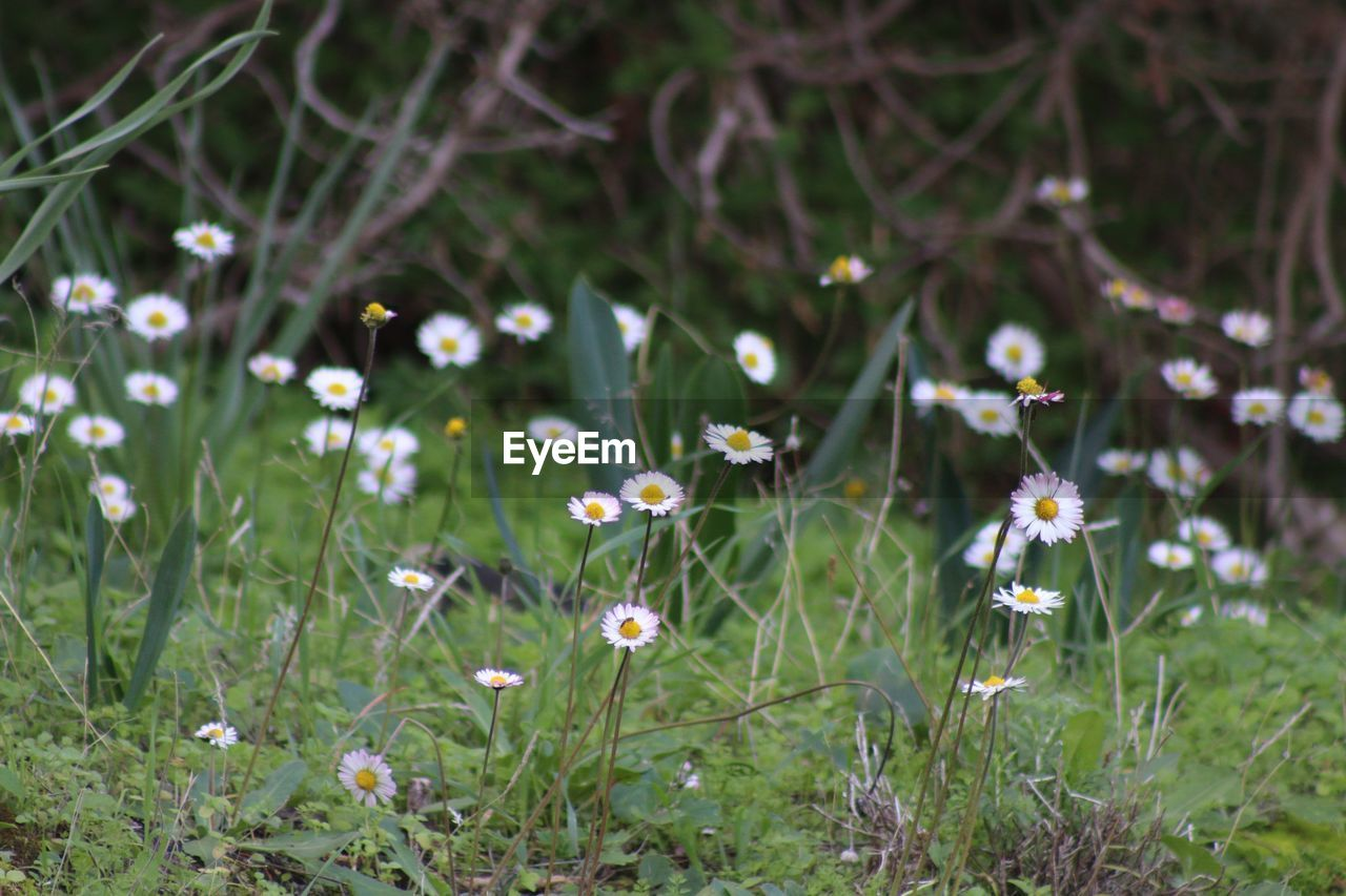 flower, growth, nature, beauty in nature, fragility, grass, plant, freshness, petal, field, no people, outdoors, blooming, day, flower head, close-up
