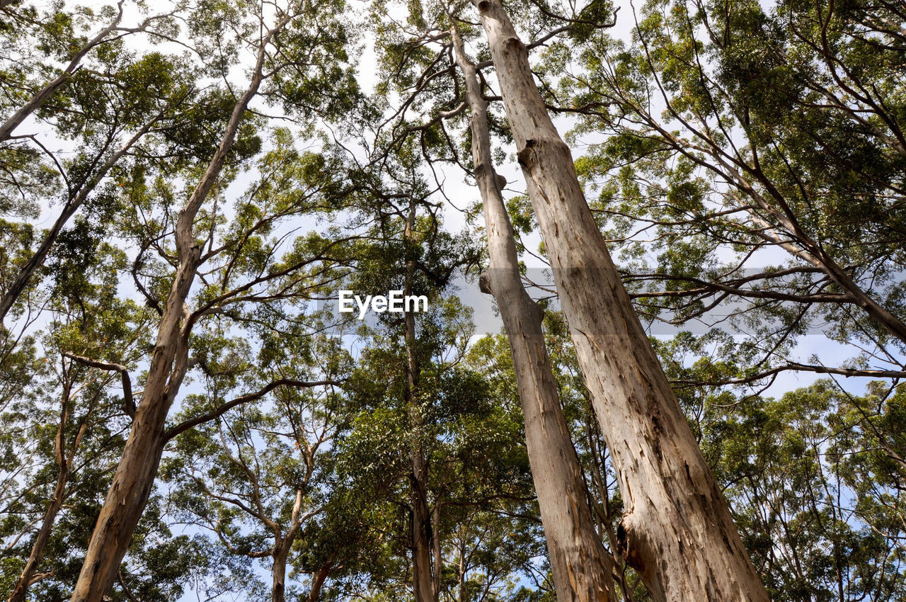 tree, tree trunk, low angle view, nature, forest, branch, day, growth, outdoors, no people, beauty in nature, sky