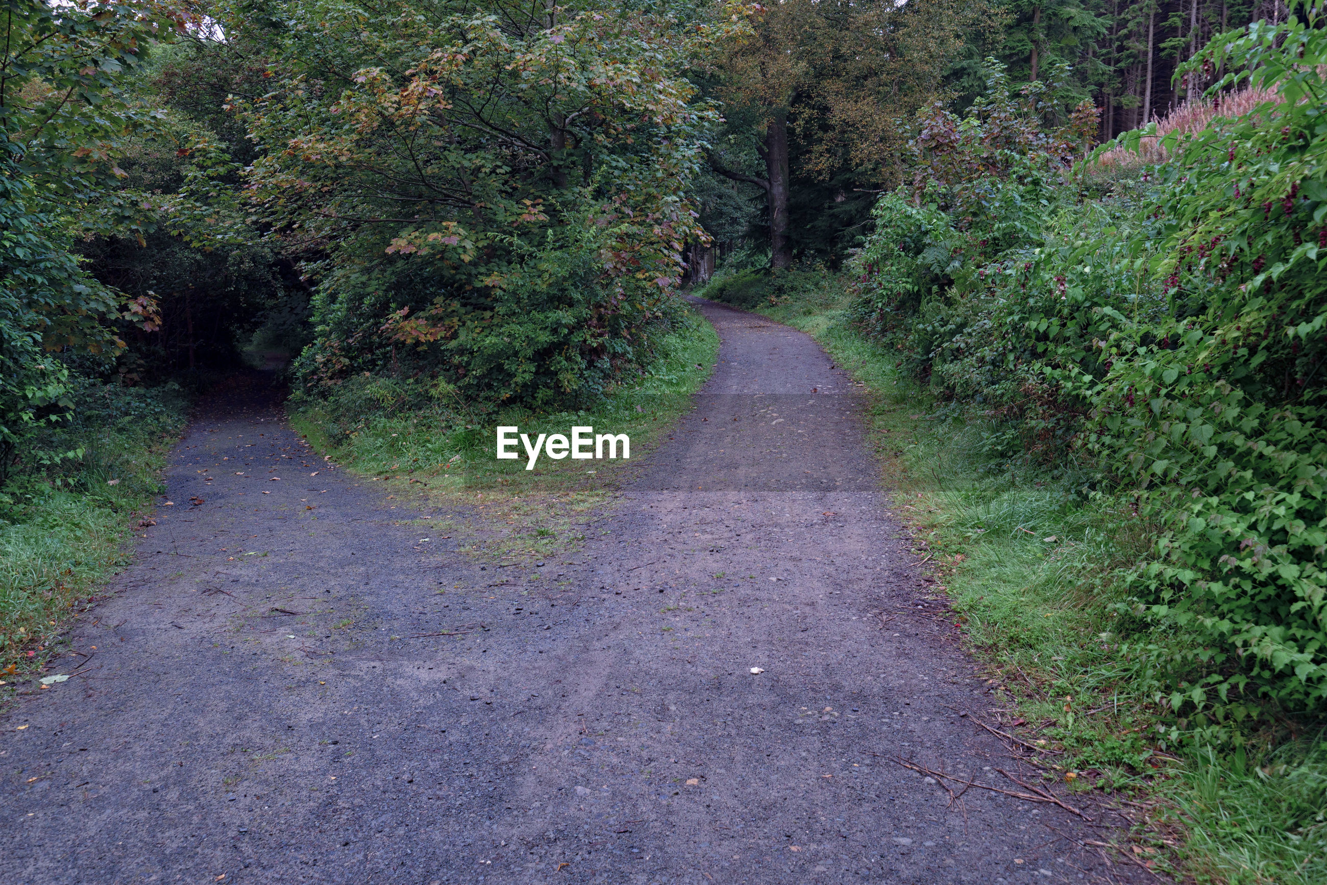 VIEW OF ROAD IN FOREST
