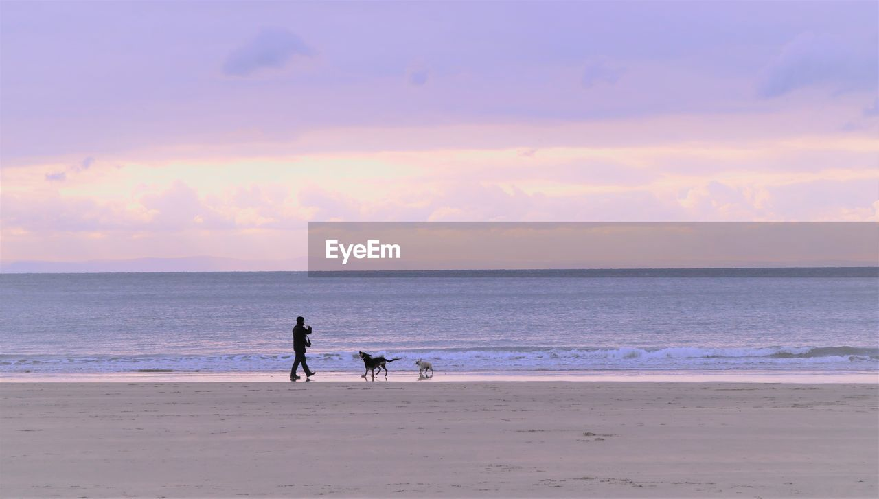 Silhouette man with dogs at beach against cloudy sky during sunset