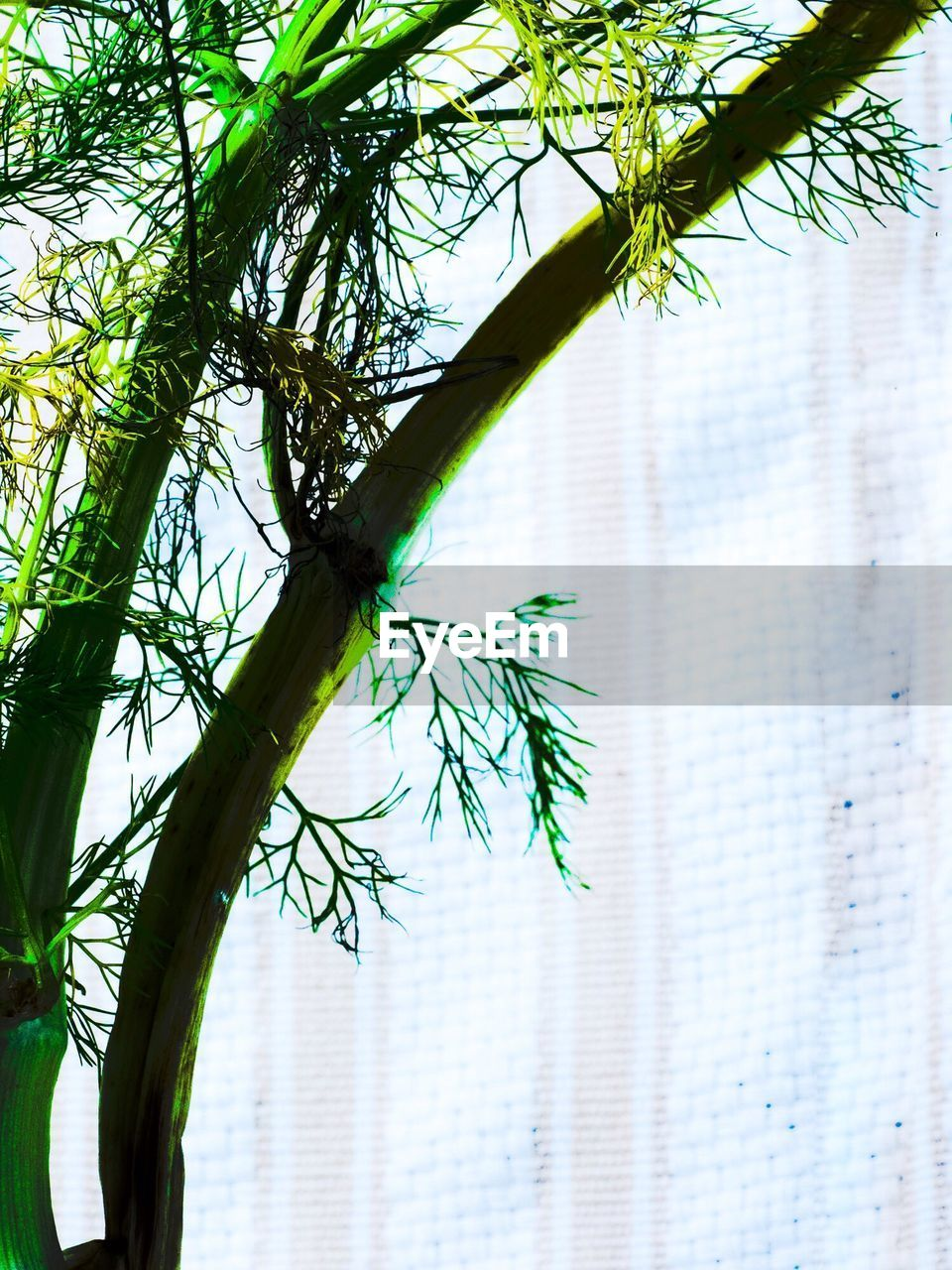 green color, growth, plant, day, tree, leaf, nature, close-up, no people, branch, low angle view, outdoors, beauty in nature, freshness
