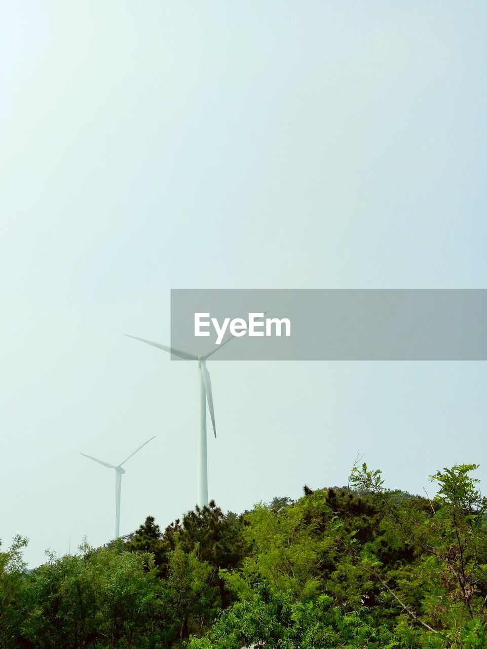 alternative energy, wind power, wind turbine, environmental conservation, renewable energy, fuel and power generation, windmill, industrial windmill, tree, day, outdoors, no people, nature, rural scene, green color, traditional windmill, clear sky, low angle view, growth, beauty in nature, technology, sky