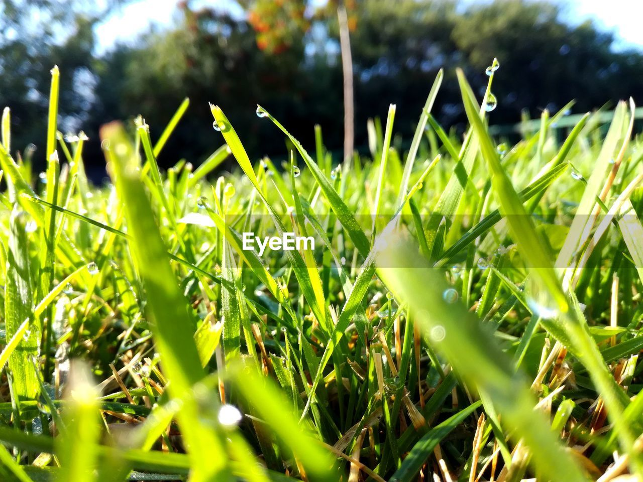 green color, growth, grass, selective focus, nature, no people, day, close-up, outdoors, beauty in nature, freshness