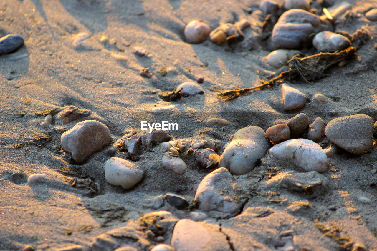 land, no people, nature, sand, beach, close-up, full frame, day, backgrounds, textured, outdoors, high angle view, selective focus, dirt, animal track, sunlight, wet, solid, paw print, stone - object, pebble