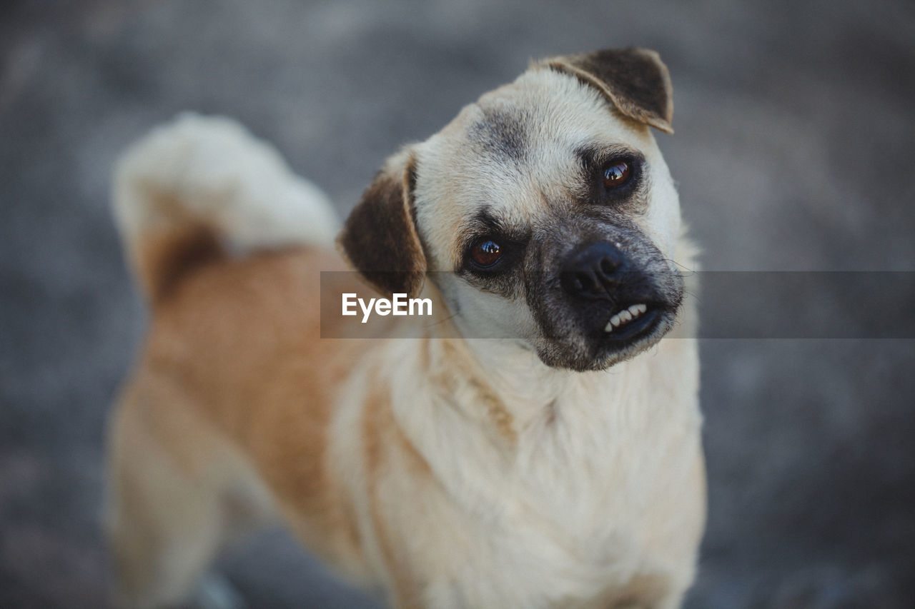 one animal, dog, canine, domestic, mammal, animal themes, pets, domestic animals, animal, portrait, vertebrate, looking at camera, focus on foreground, no people, close-up, high angle view, looking, cute, puppy, animal body part, animal head, small, animal eye