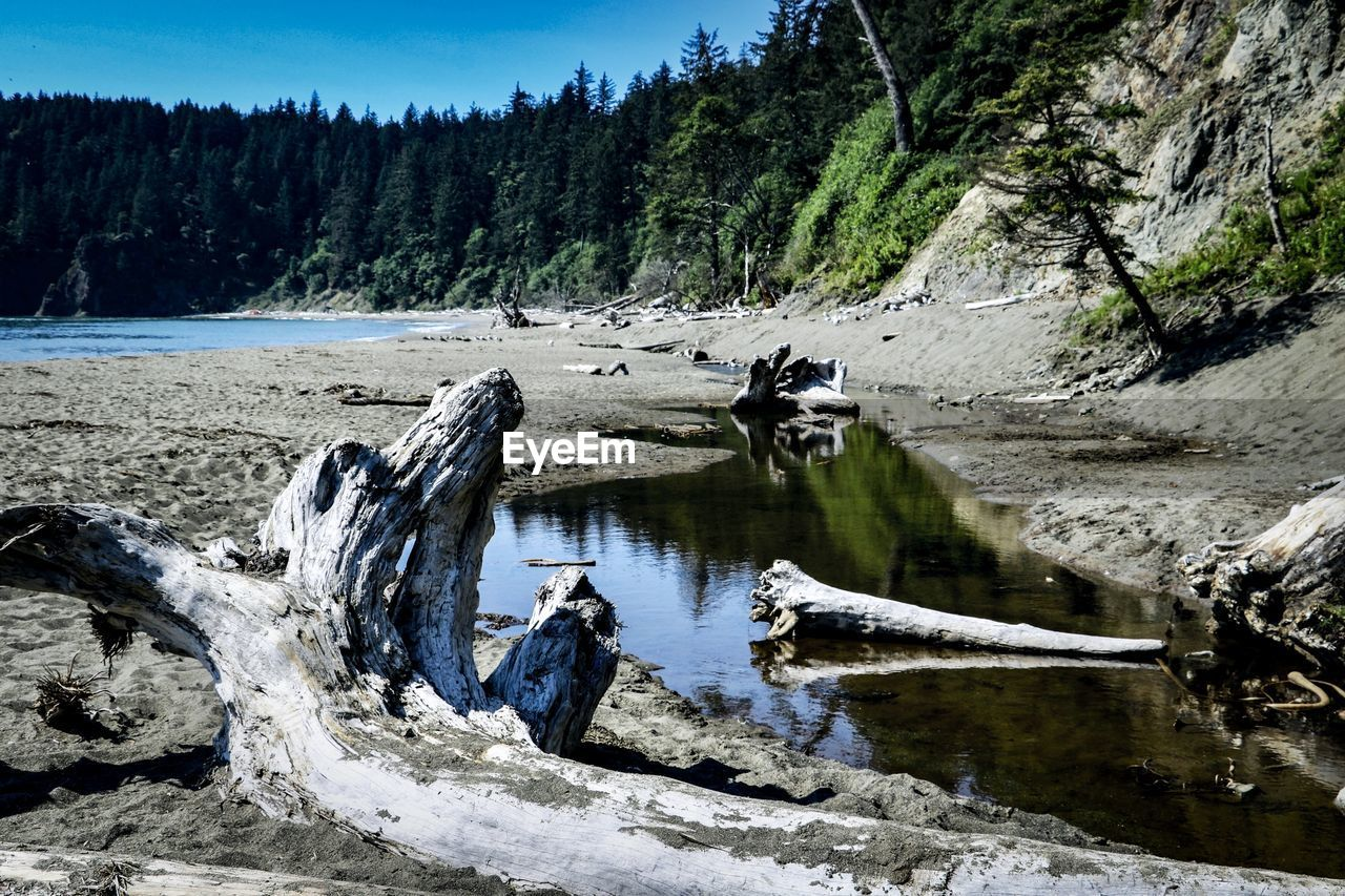 water, tree, scenics - nature, plant, beauty in nature, nature, non-urban scene, day, lake, tranquility, tranquil scene, rock, no people, group of animals, forest, rock - object, animal, motion, animal themes, outdoors, flowing water, driftwood
