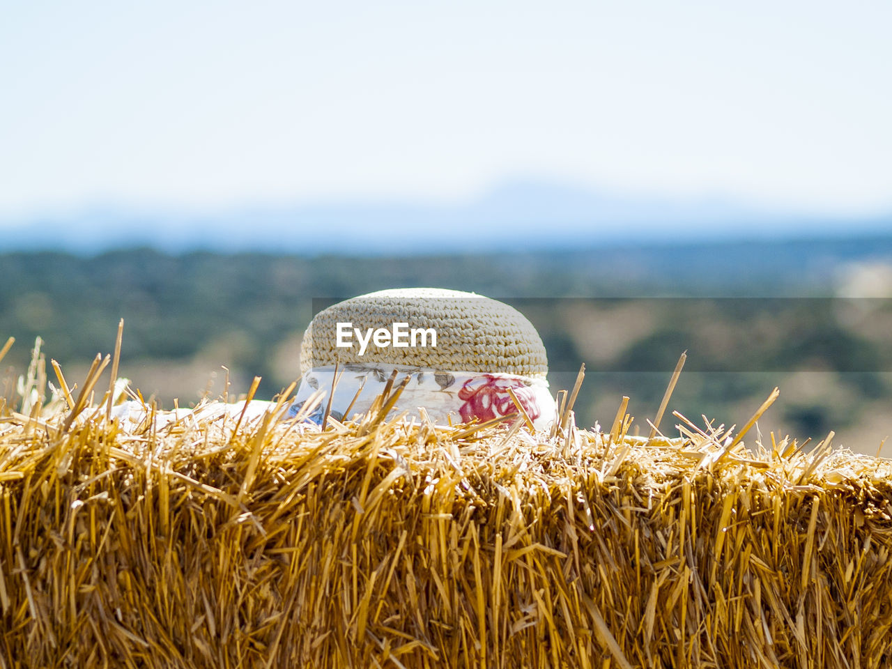 day, nature, land, focus on foreground, close-up, sky, plant, hat, no people, beauty in nature, sunlight, outdoors, field, tranquility, selective focus, agriculture, animal themes, animal, landscape, growth